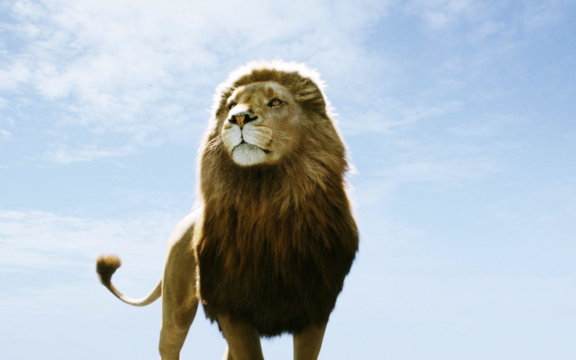 1920x1200 Image - Aslan-Lion-The-Chronicles-of-Narnia-Wallpaper.