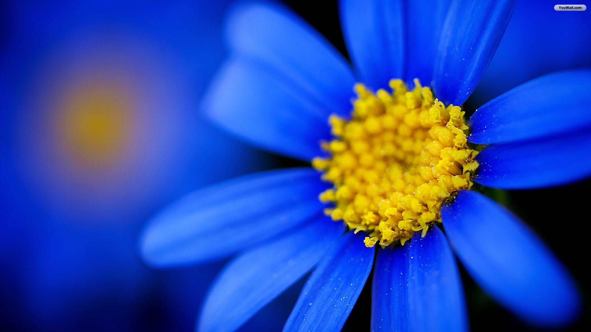 Pretty blue wallpaper 46 images 1920x1080 pretty blue flower wallpaper mightylinksfo