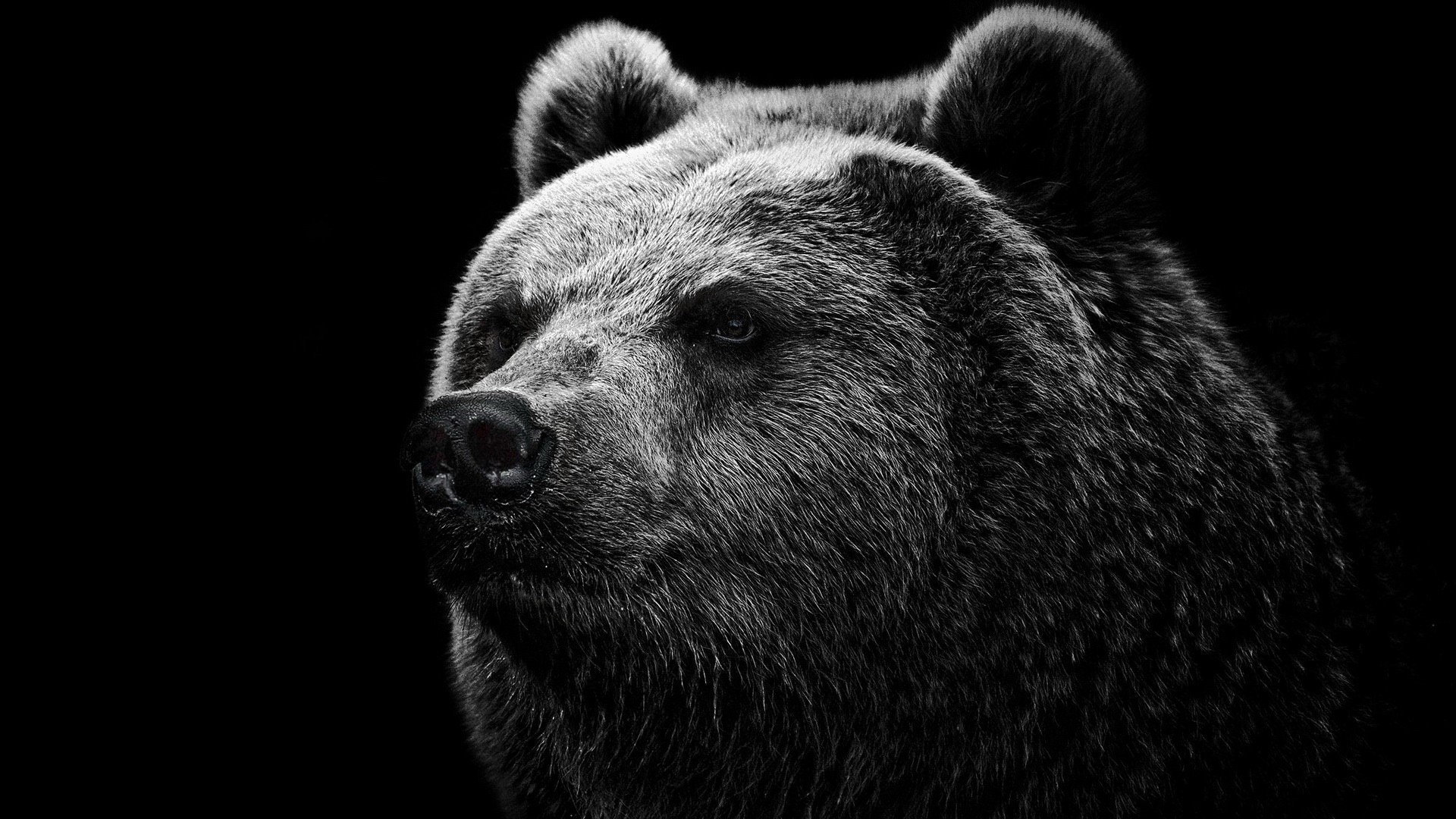 1920x1080 Cute Bear Face Black Black White Download Hd Wallpaper Image Wallpaper
