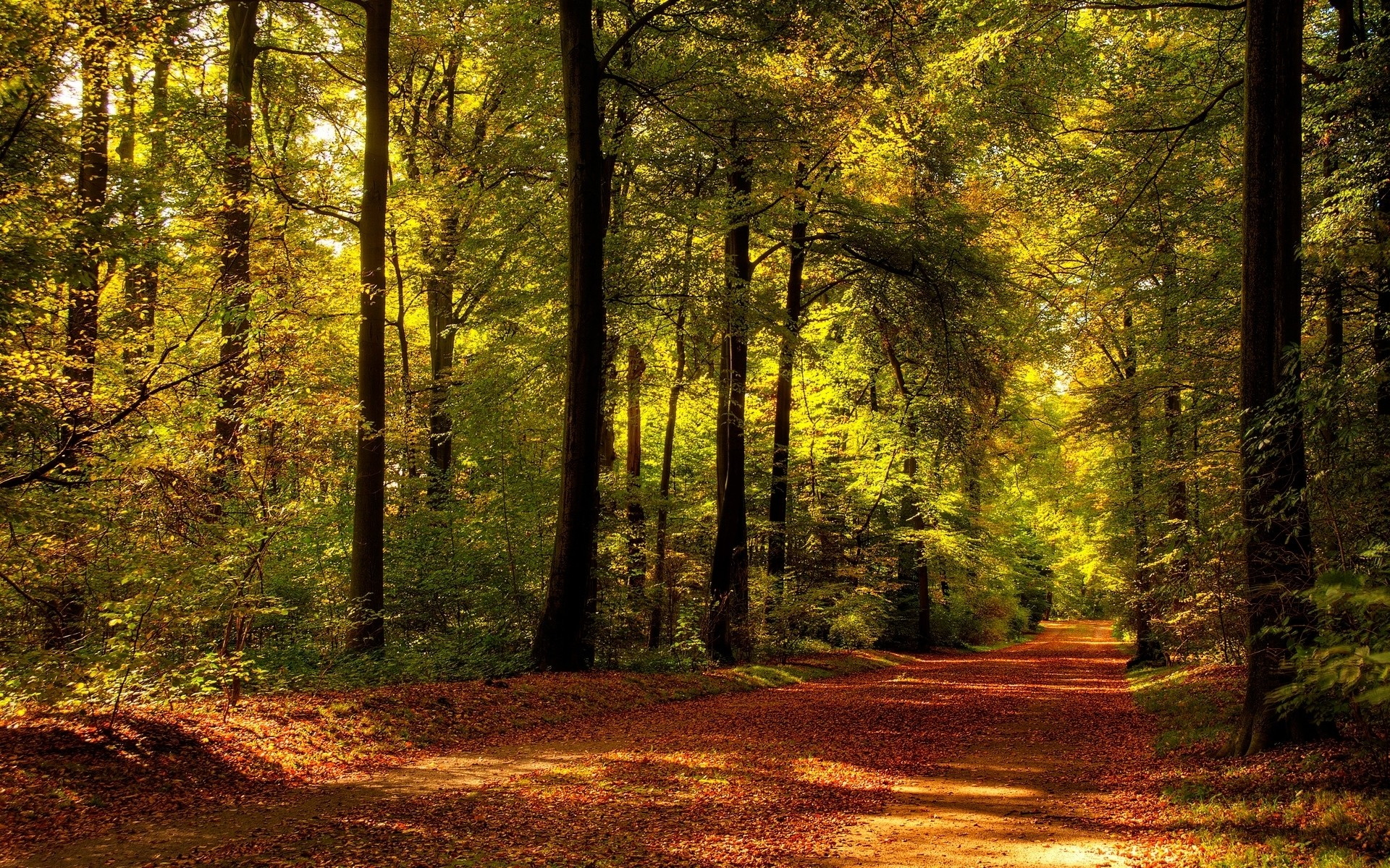 1920x1200 Autumn Path Forest Sunlight wallpapers and stock photos