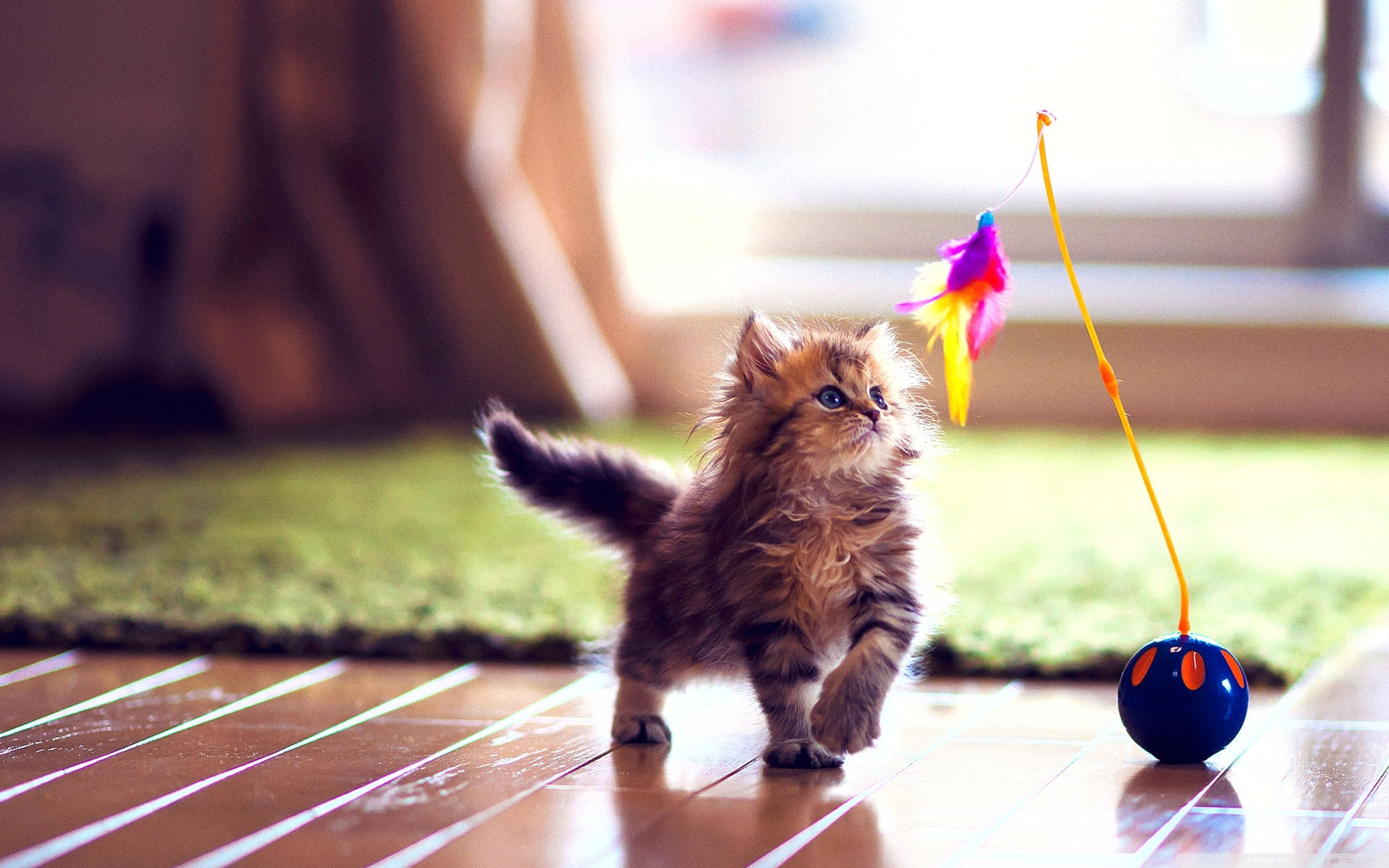 1920x1080 Beautiful Kittens wallpaper,Beautiful Kittens image,Beautiful Kittens hd