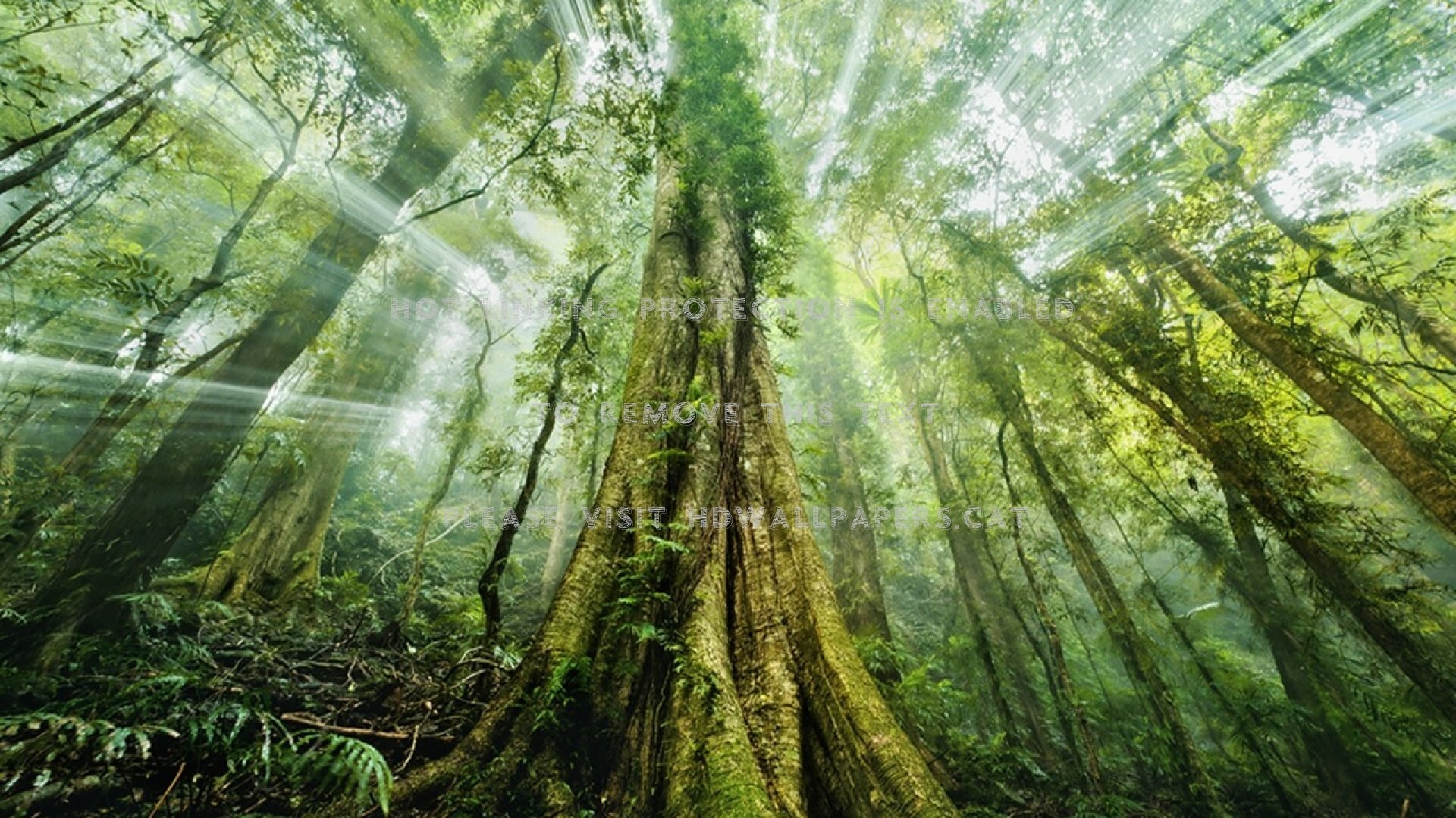 Mystical Forest Wallpaper 66 Images