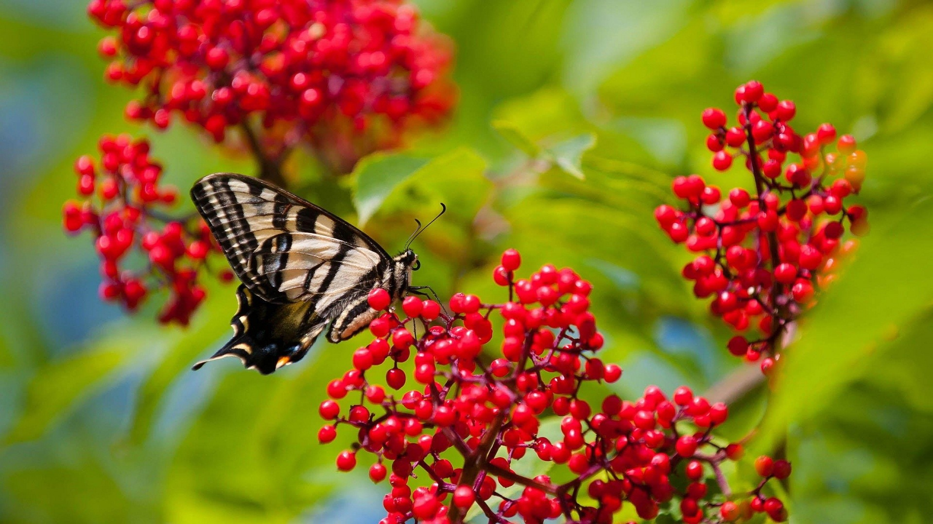 Butterflies Wallpapers Hd Download: Beautiful Butterflies And Flowers Wallpapers (56+ Images