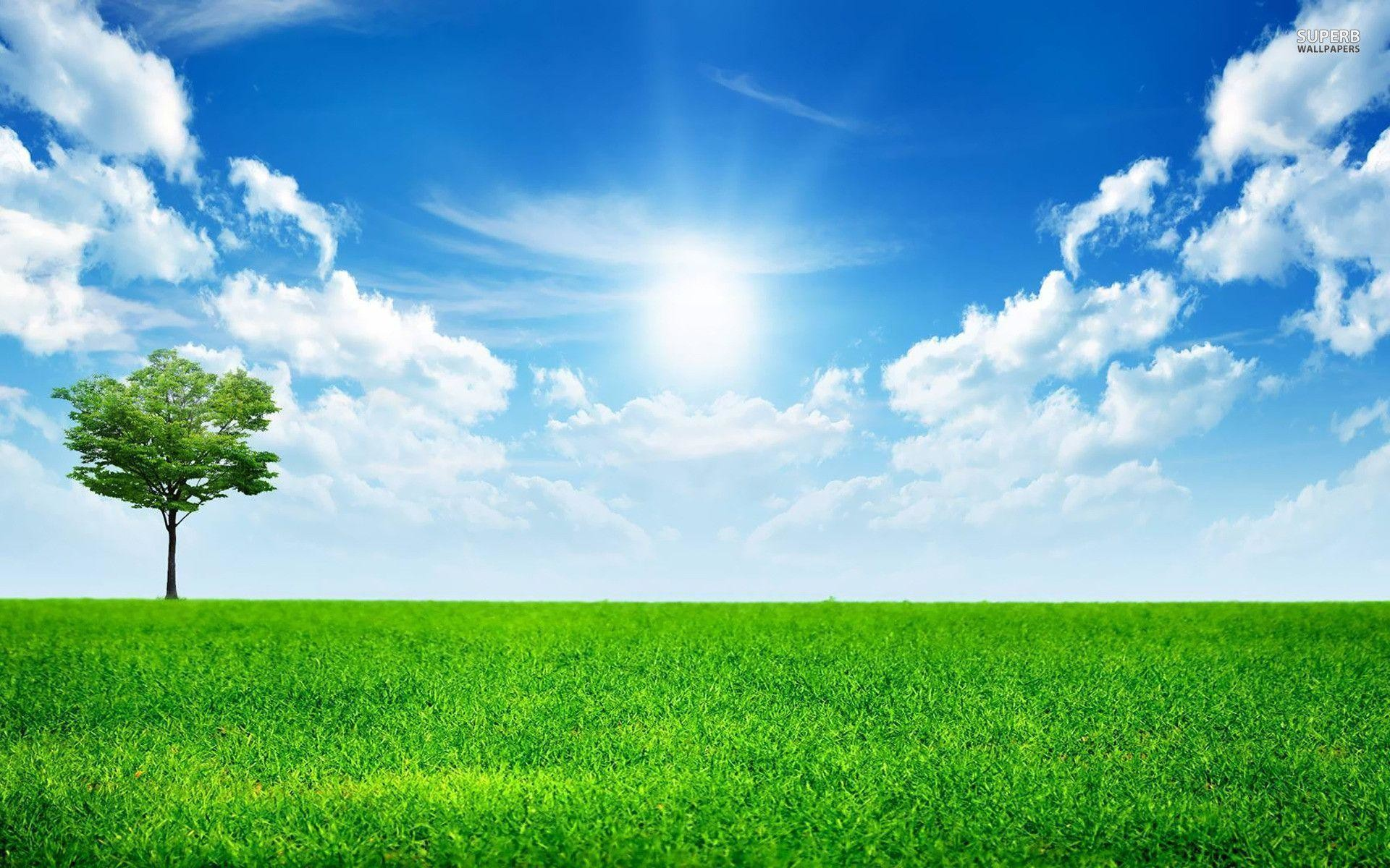 1920x1200 Sunny blue sky wallpaper - Nature wallpapers - #