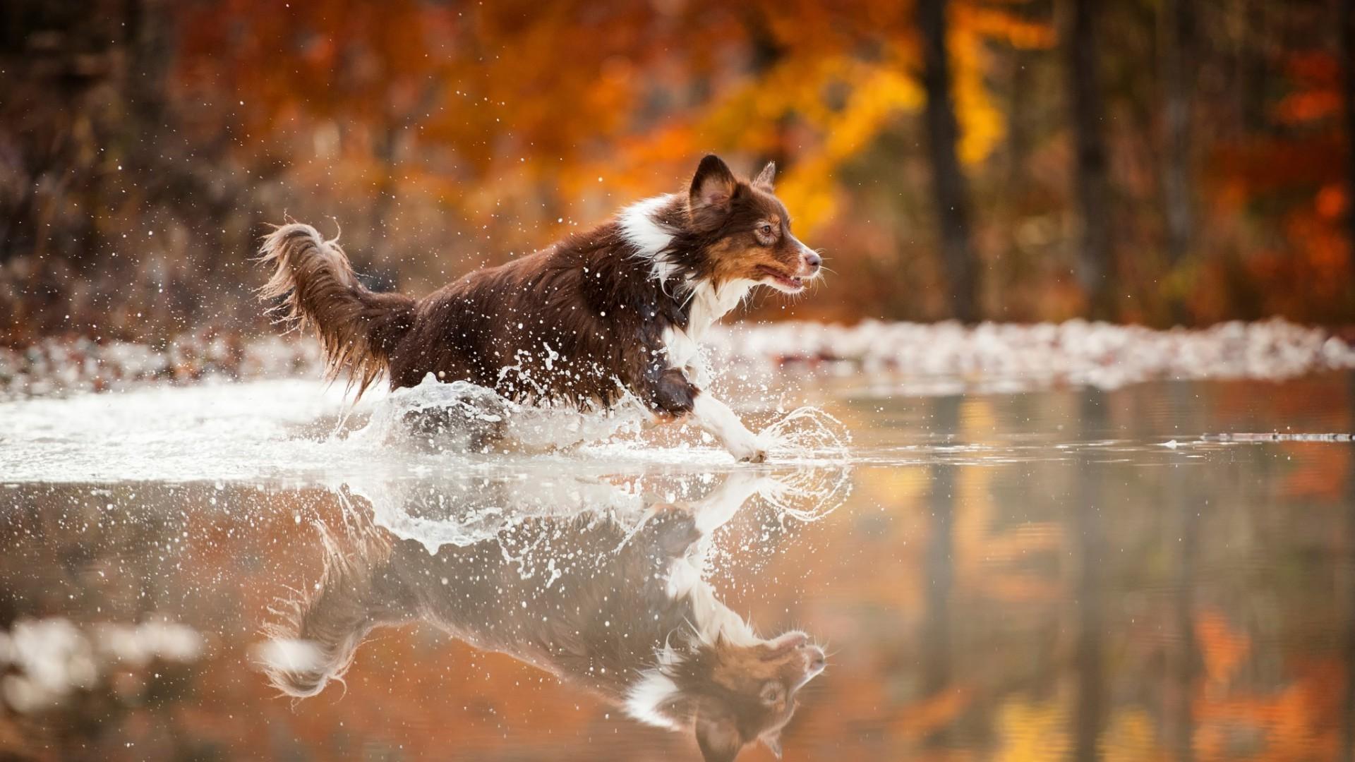 Animals Dog Filter Wallpapers Hd Desktop And Mobile: Running Desktop Backgrounds (65+ Images