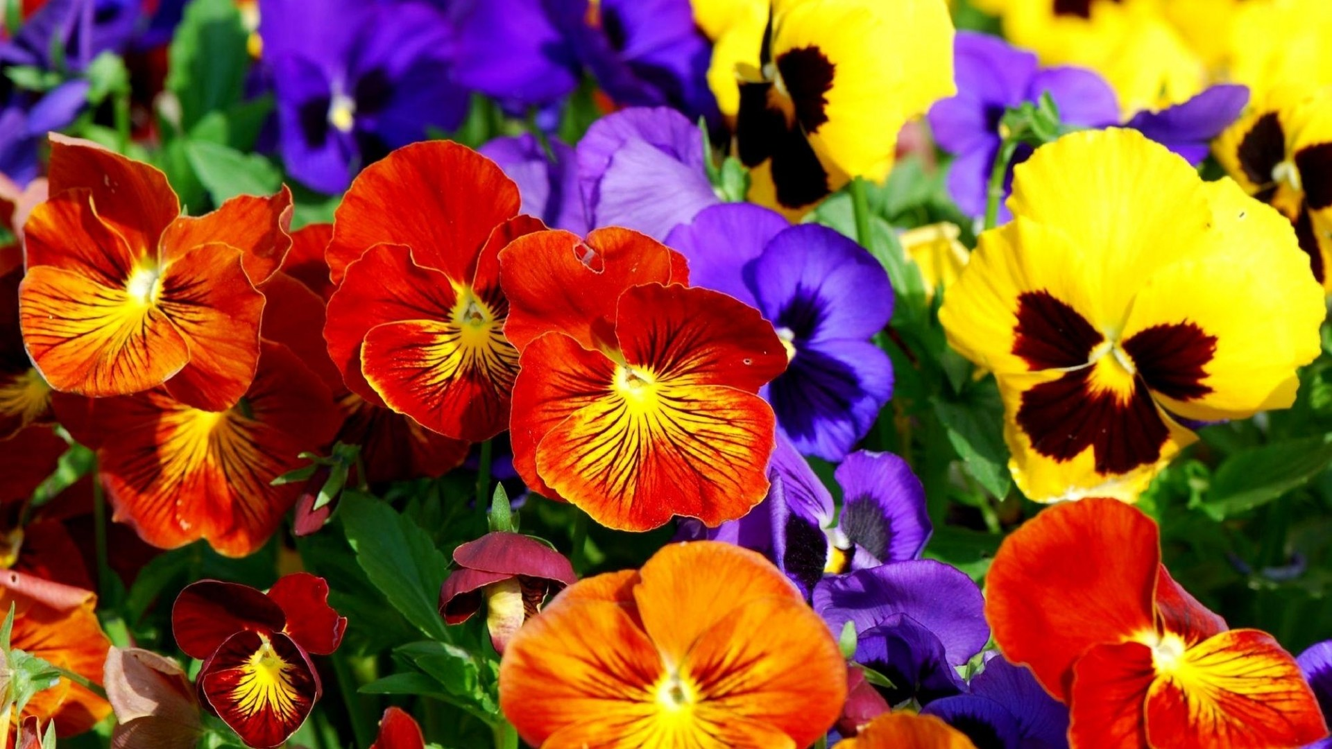 1920x1080 7. colorful-flower-wallpaper7-600x338