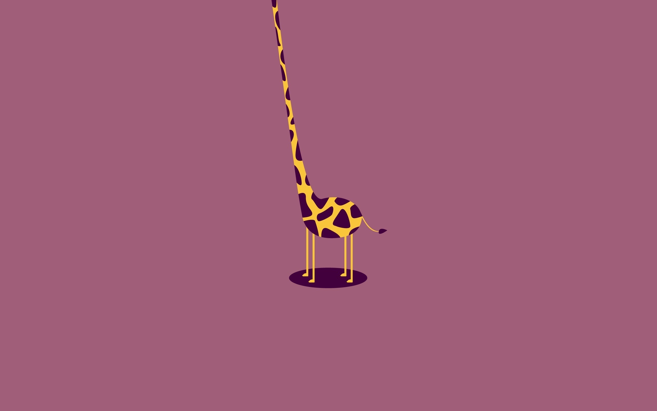 2560x1600 Giraffe Desktop Wallpapers, Stretching Giraffe Desktop Backgrounds .