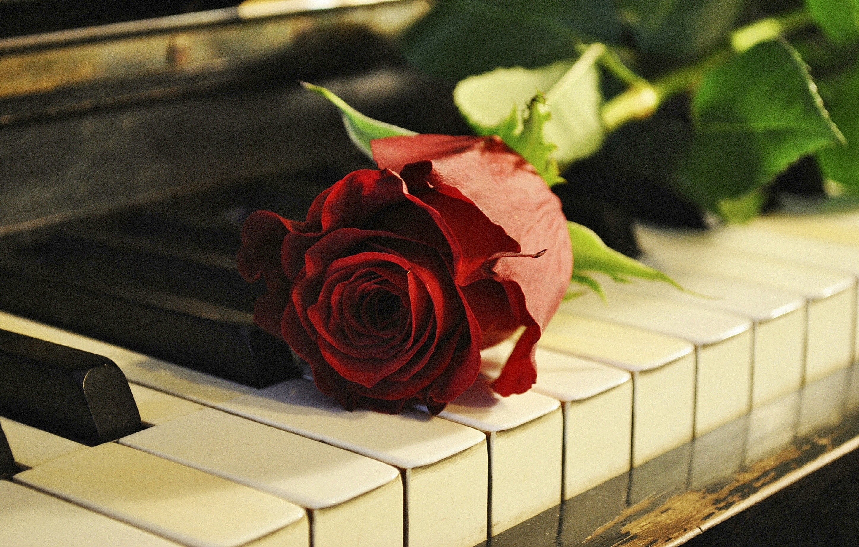 Great Wallpaper Music Rose - 545638  Pictures_546727.jpg