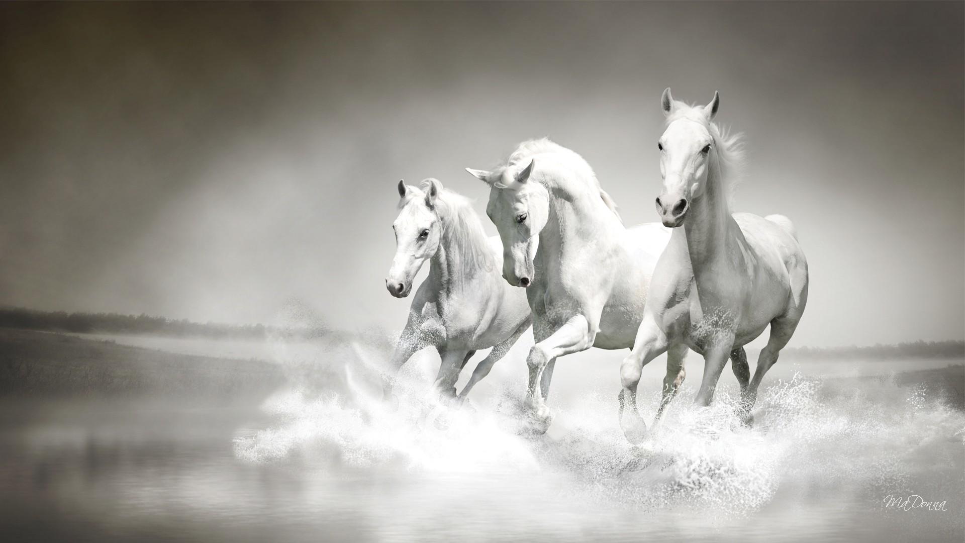 White Horse Wallpaper 68 Images