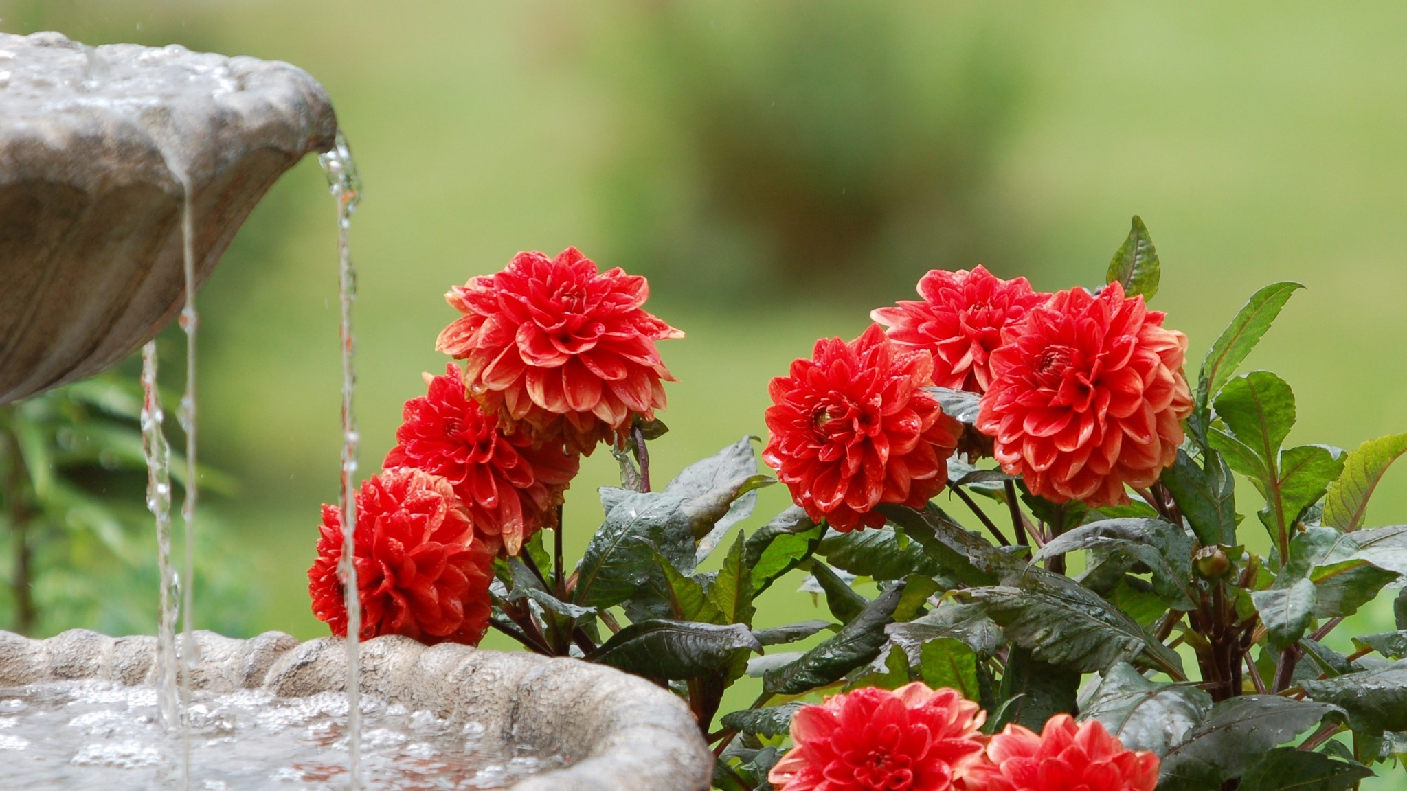 2048x1152  Wallpaper dahlias, water, fountain, summer, garden