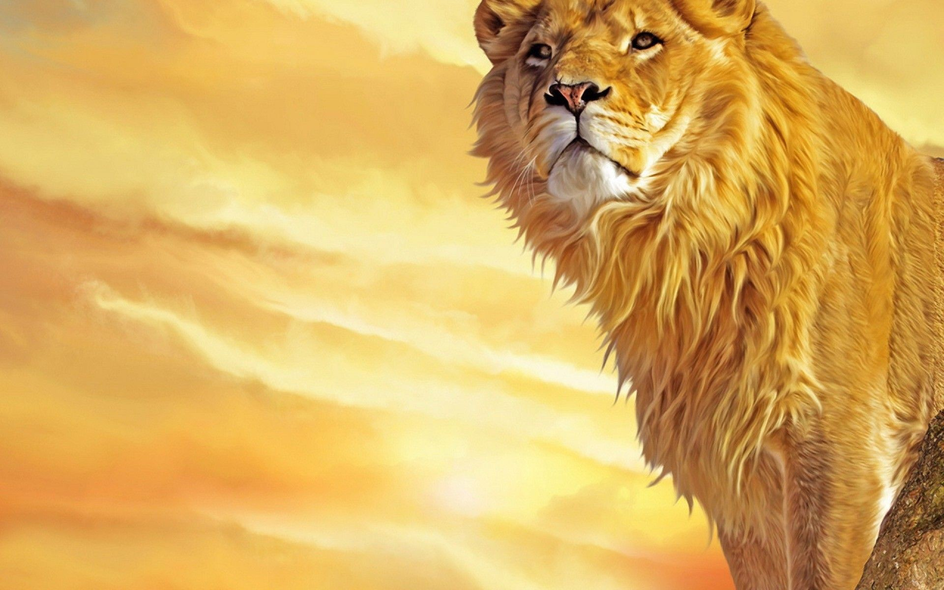 1920x1200 Angry Lion Wallpaper | HD Animals | Pinterest | Nature wallpaper, Lions and  Wallpaper