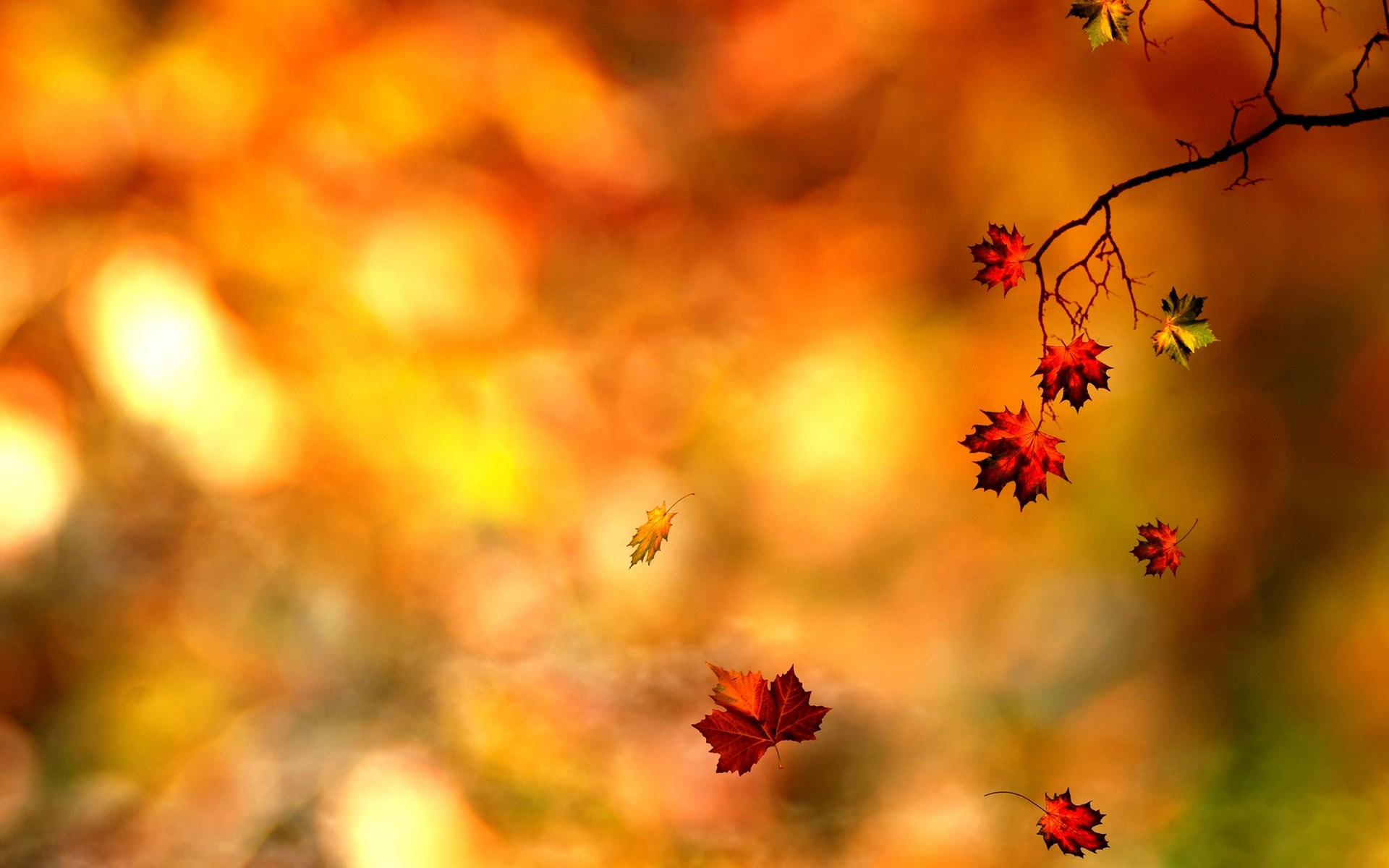 1920x1200 Related Wallpapers from Colored Pencils Wallpaper. Awesome Autumn Leaf  Wallpaper PC 064 Wallpaper
