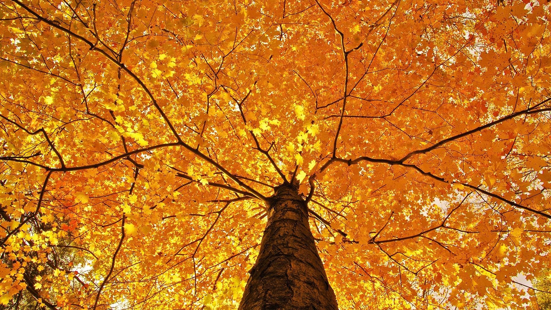 Pin by LU LU BELL on CHANGE OF SEASONS Wallpaper Autumn Autumn