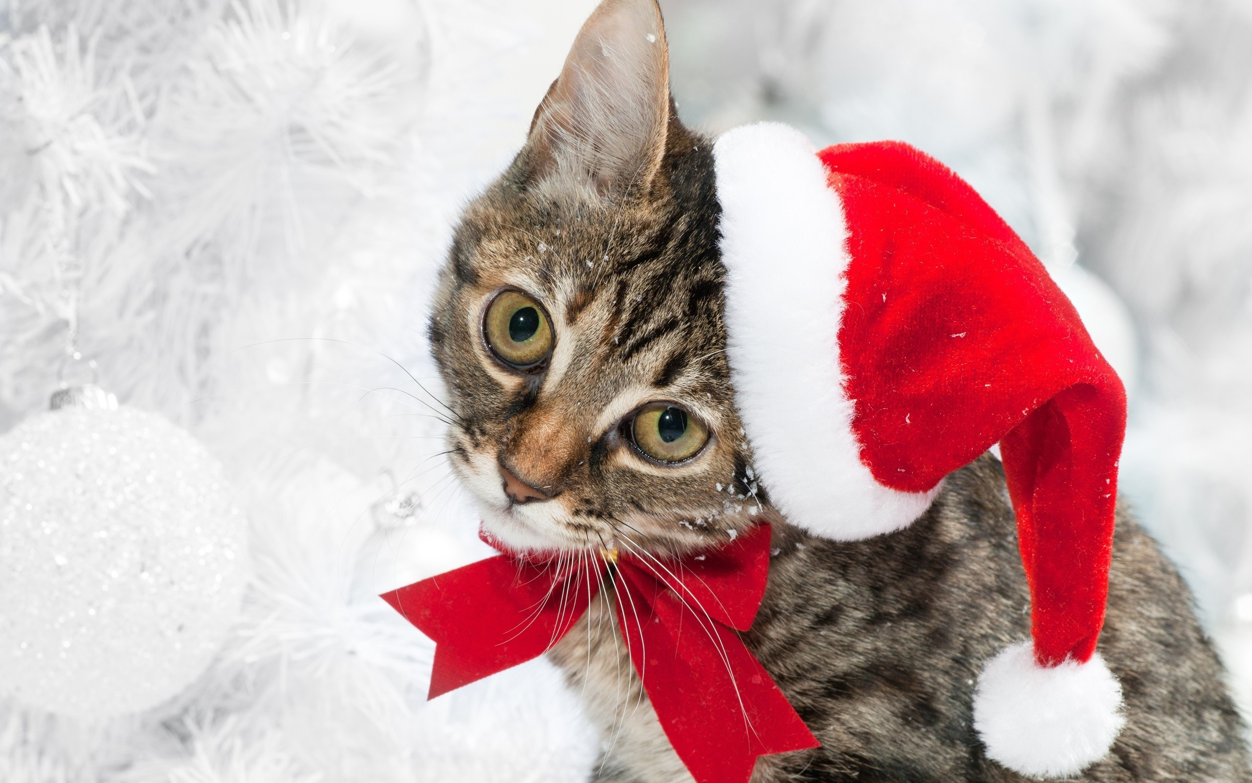 2560x1600 The Christmas Kitty wallpaper