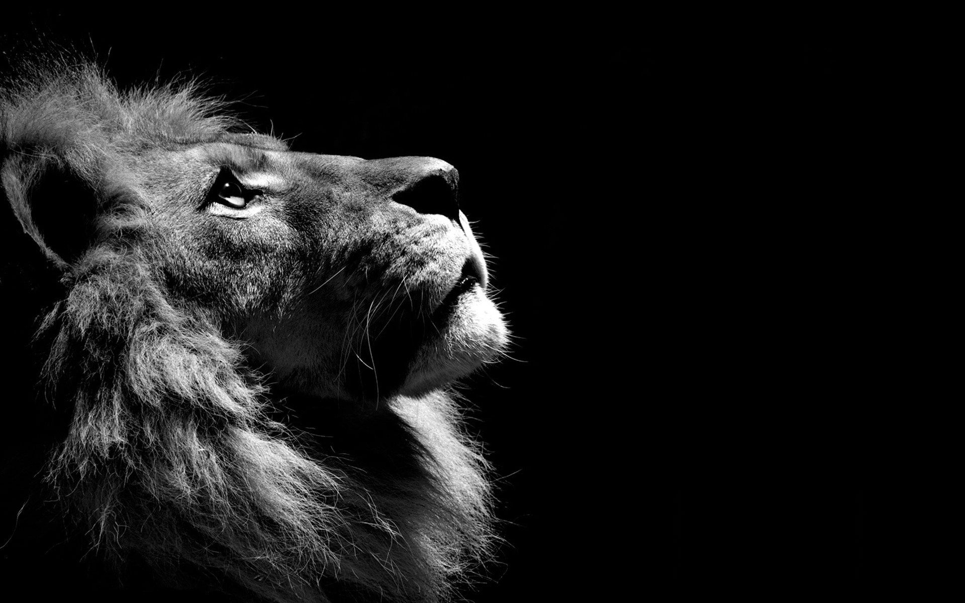 Astonishing Lion Wallpaper Desktop 68 Images Download Free Architecture Designs Embacsunscenecom