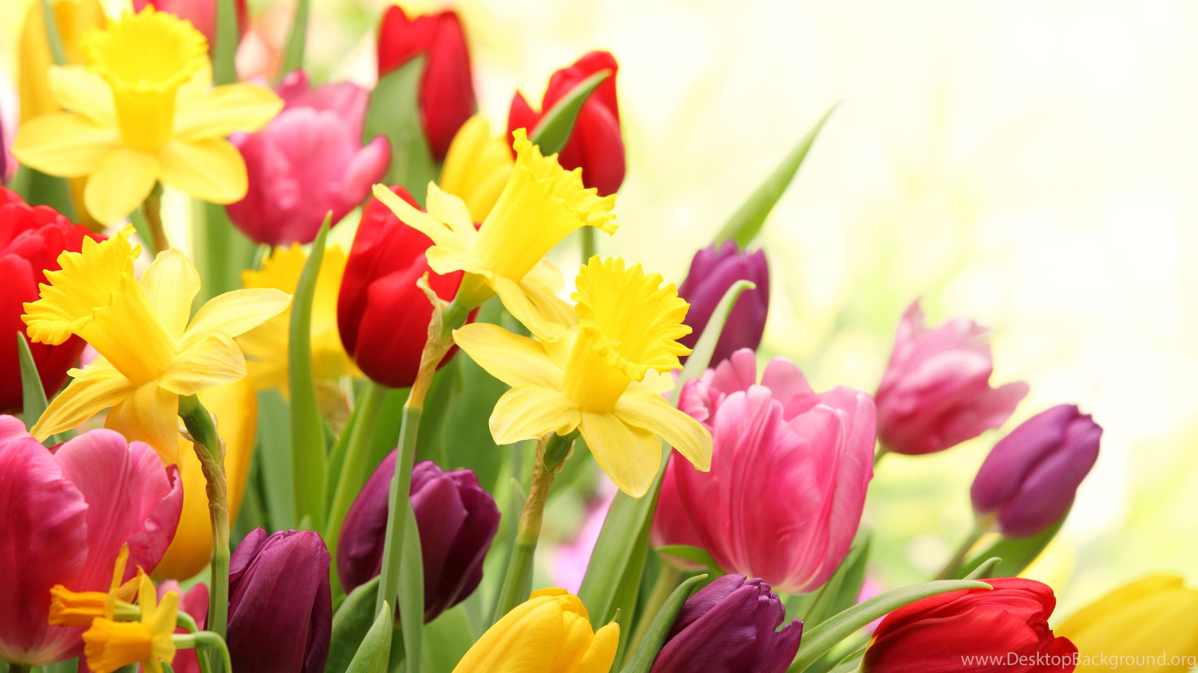 Desktop Wallpaper Spring Flowers (60+ Images