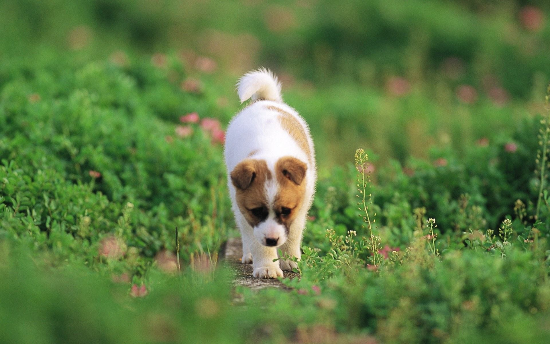 Puppy Wallpaper HD 60 Images