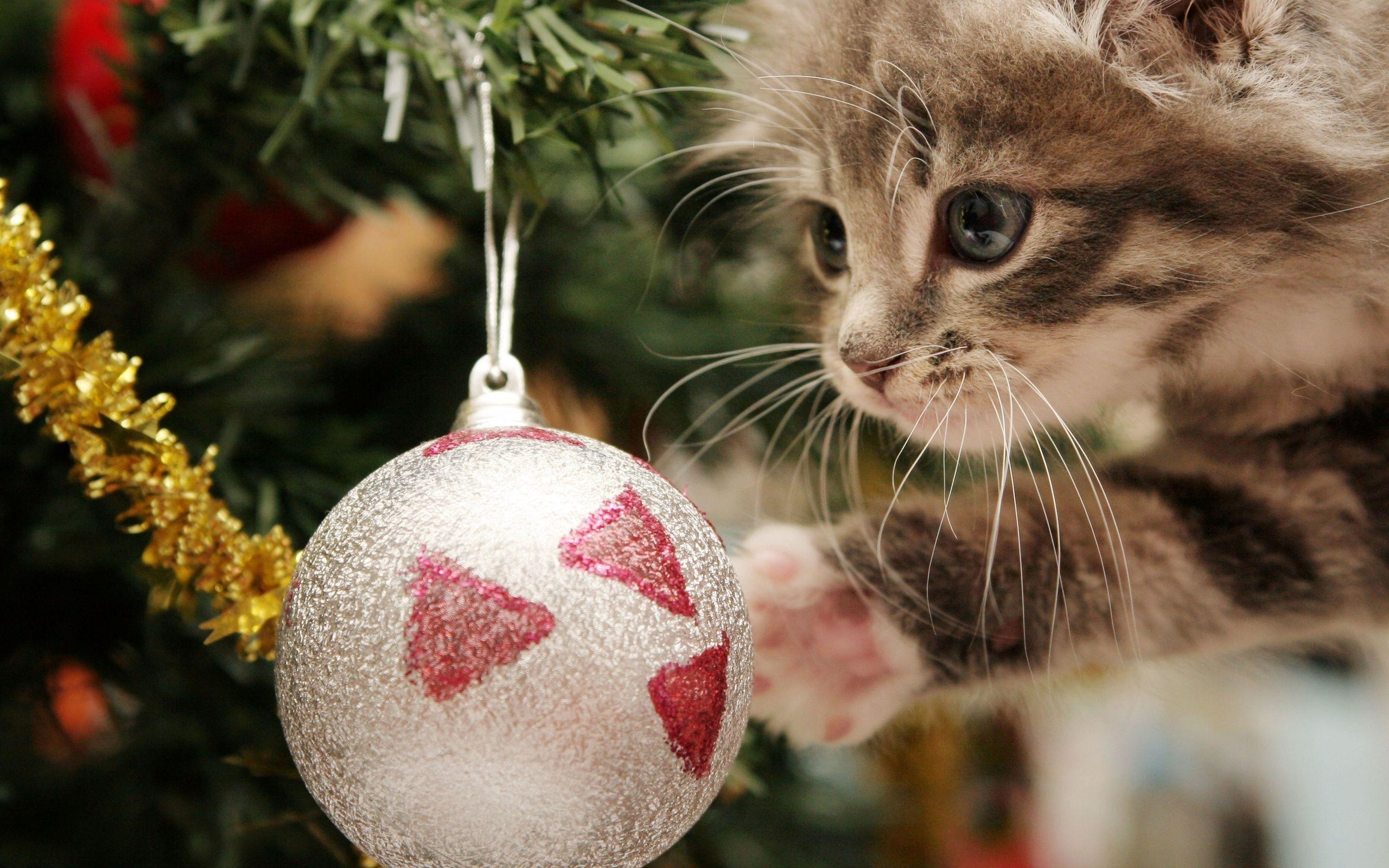 2560x1600 Xmas Stuff For > Christmas Kittens Wallpaper