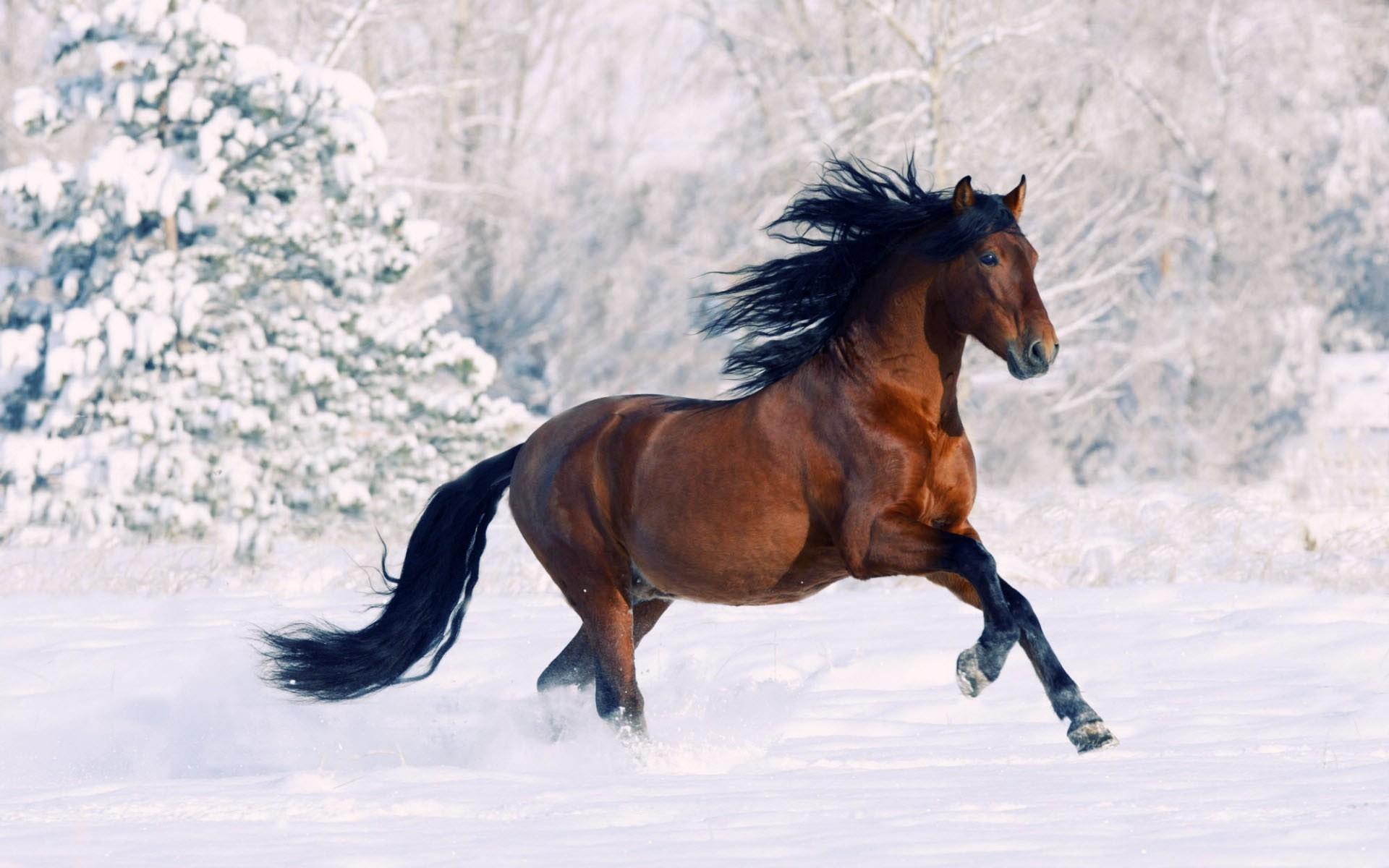 Pretty Horse Wallpapers Nosirix