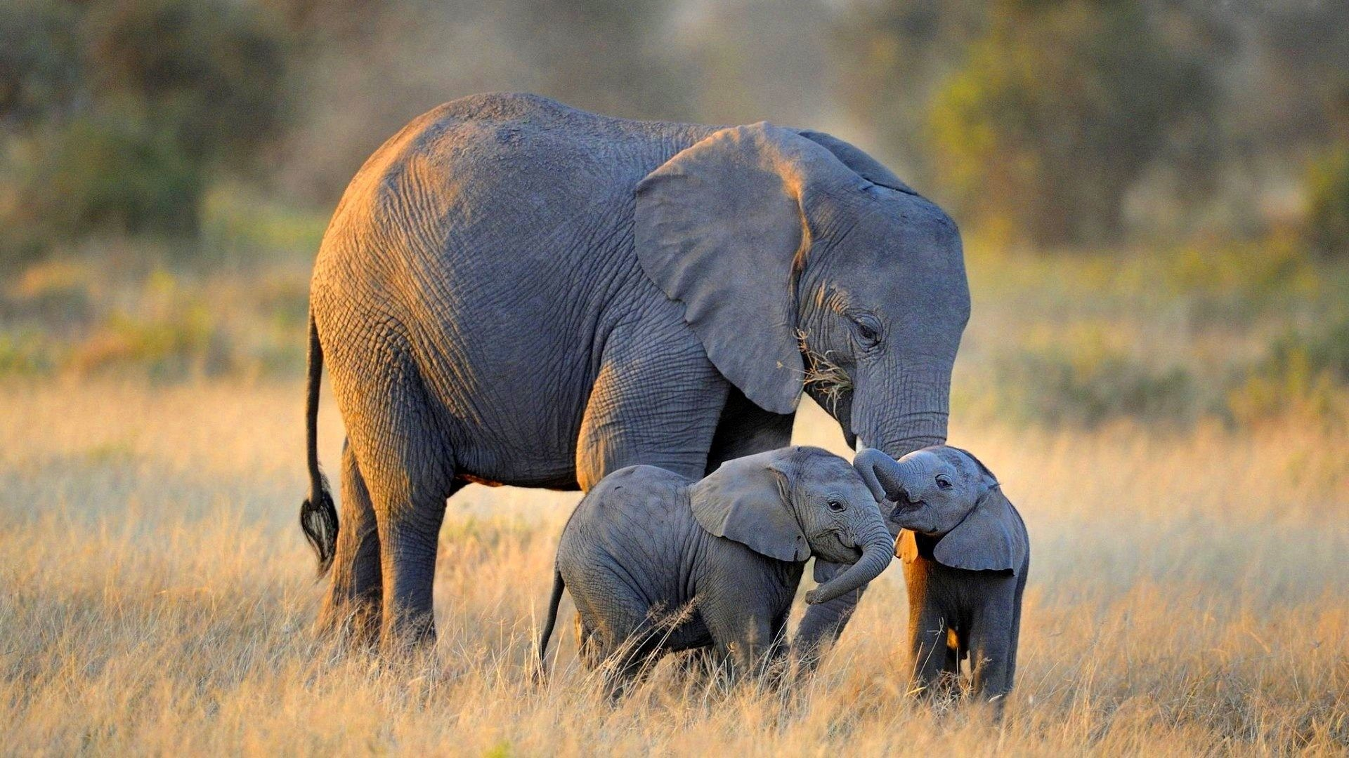 Baby Elephant Wallpaper 66 Images