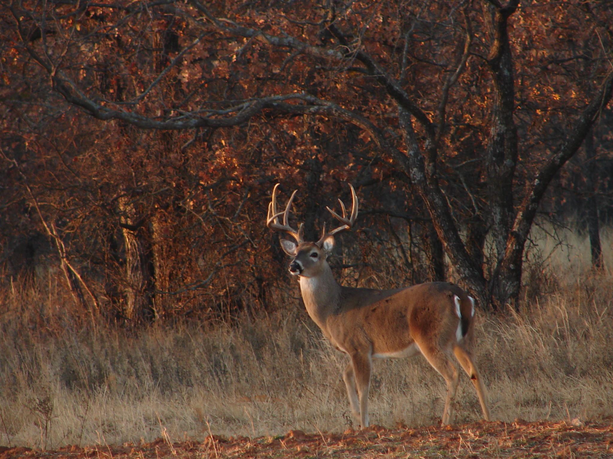 Deer Desktop Backgrounds 59 images