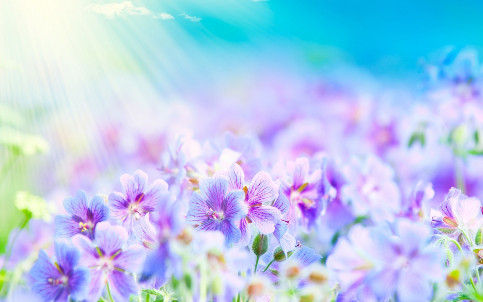 2560x1920 Texture Flowers Flower Background