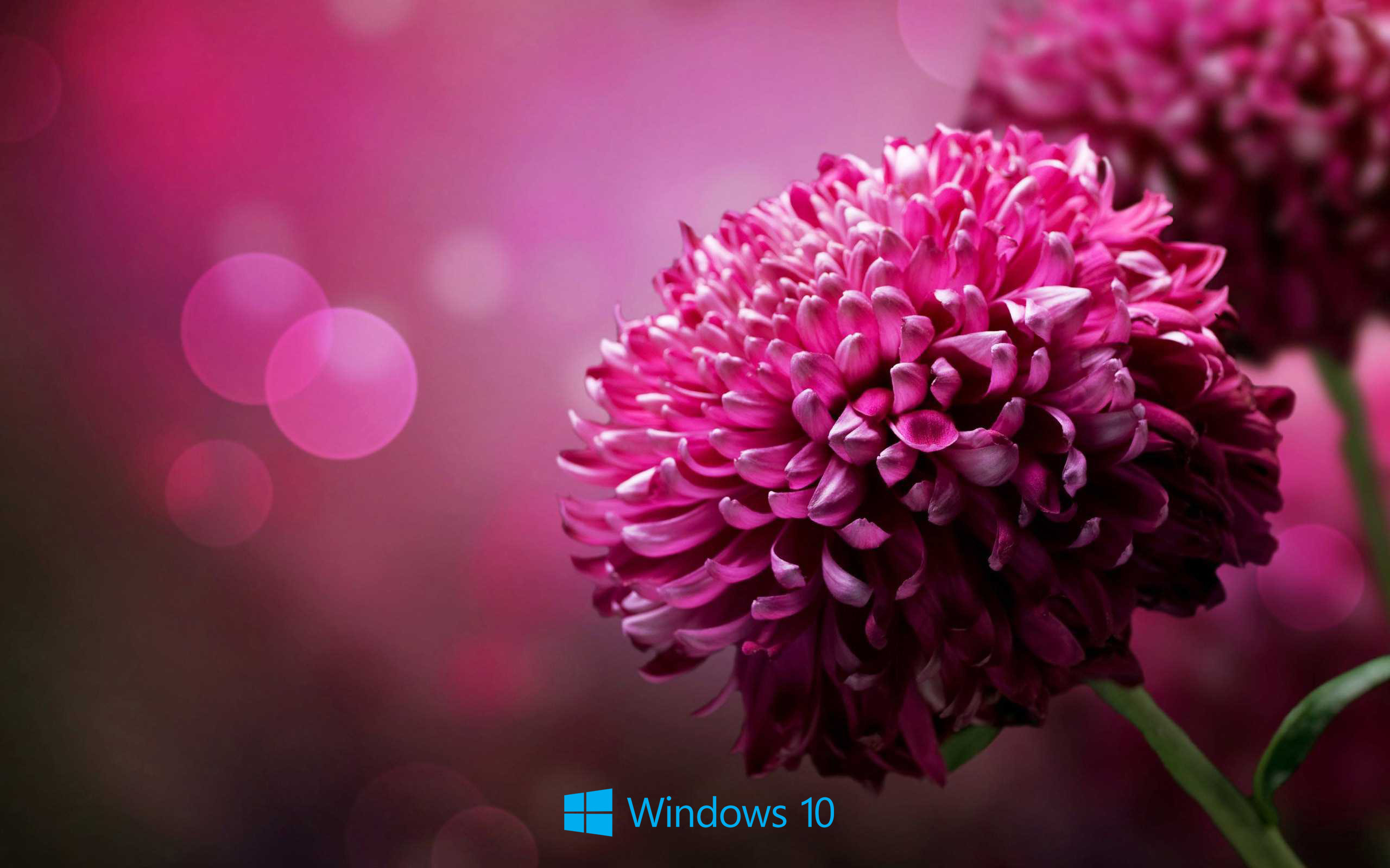 2560x1600 ... File attachment for Desktop Backgrounds for windows 10 - purple flower