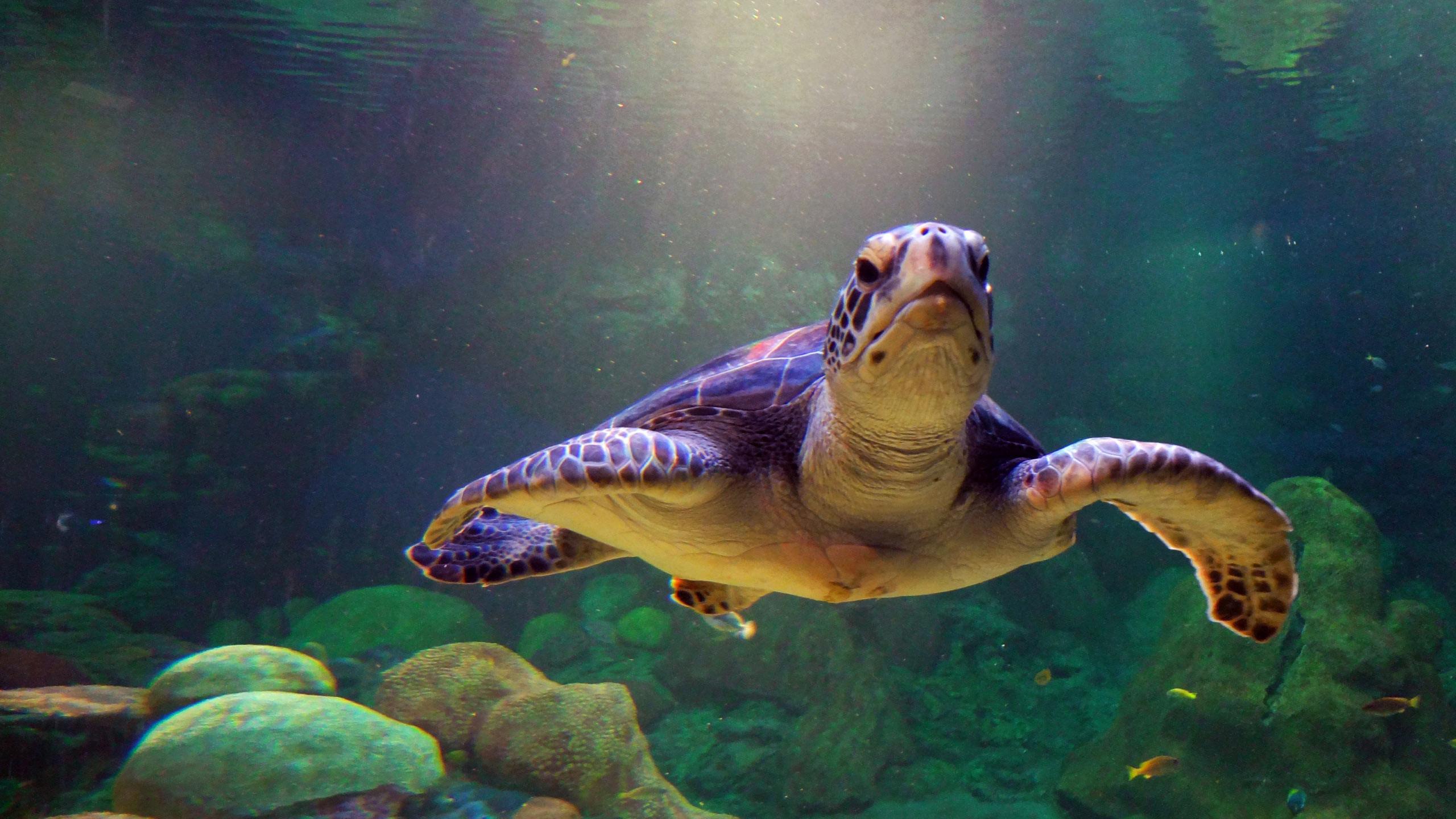 Cute turtle wallpaper
