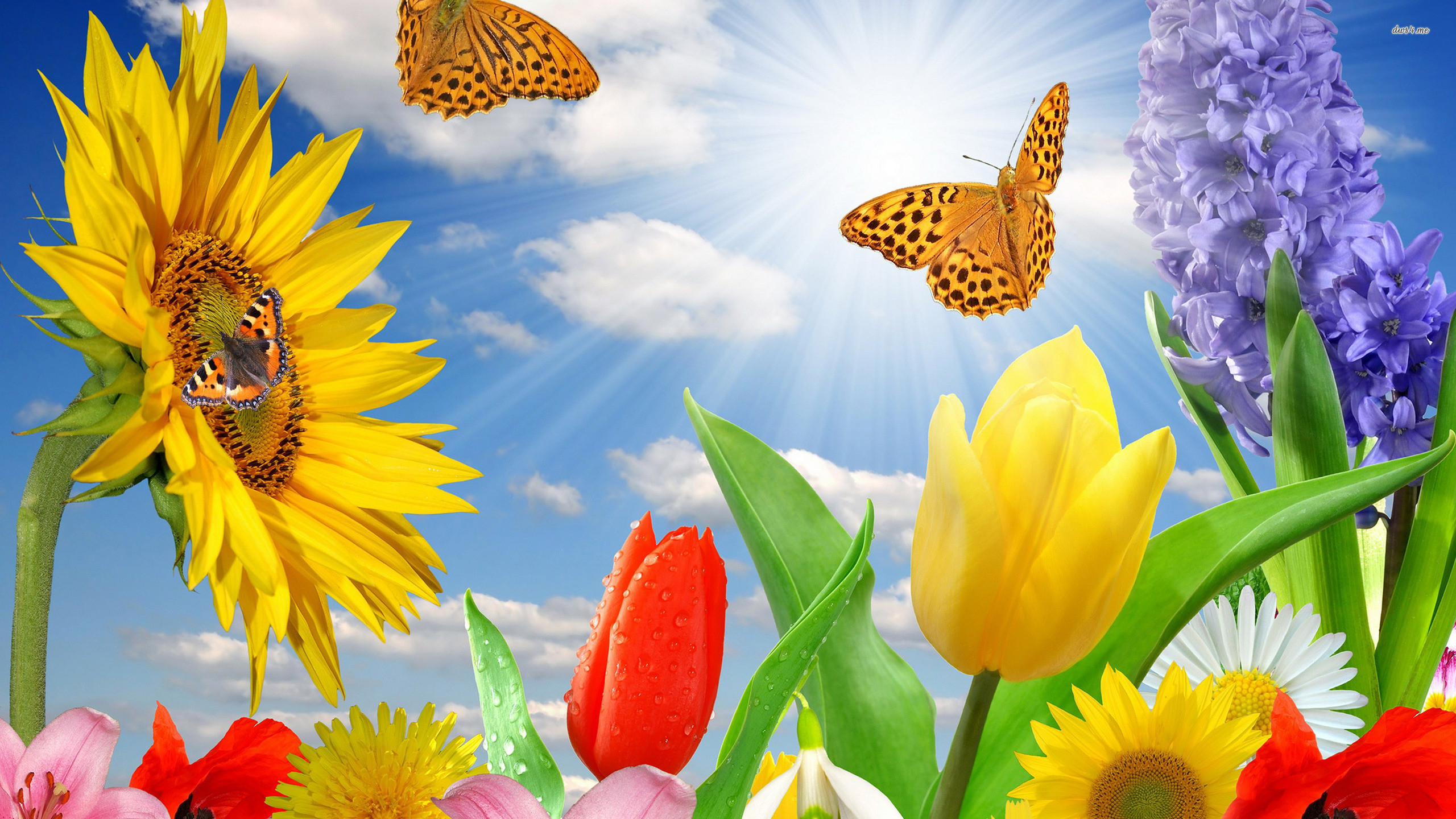 2560x1440 spring-flowers-and-butterflies-background-hd-cool-7 » spring-flowers -and-butterflies-background-hd-cool-7