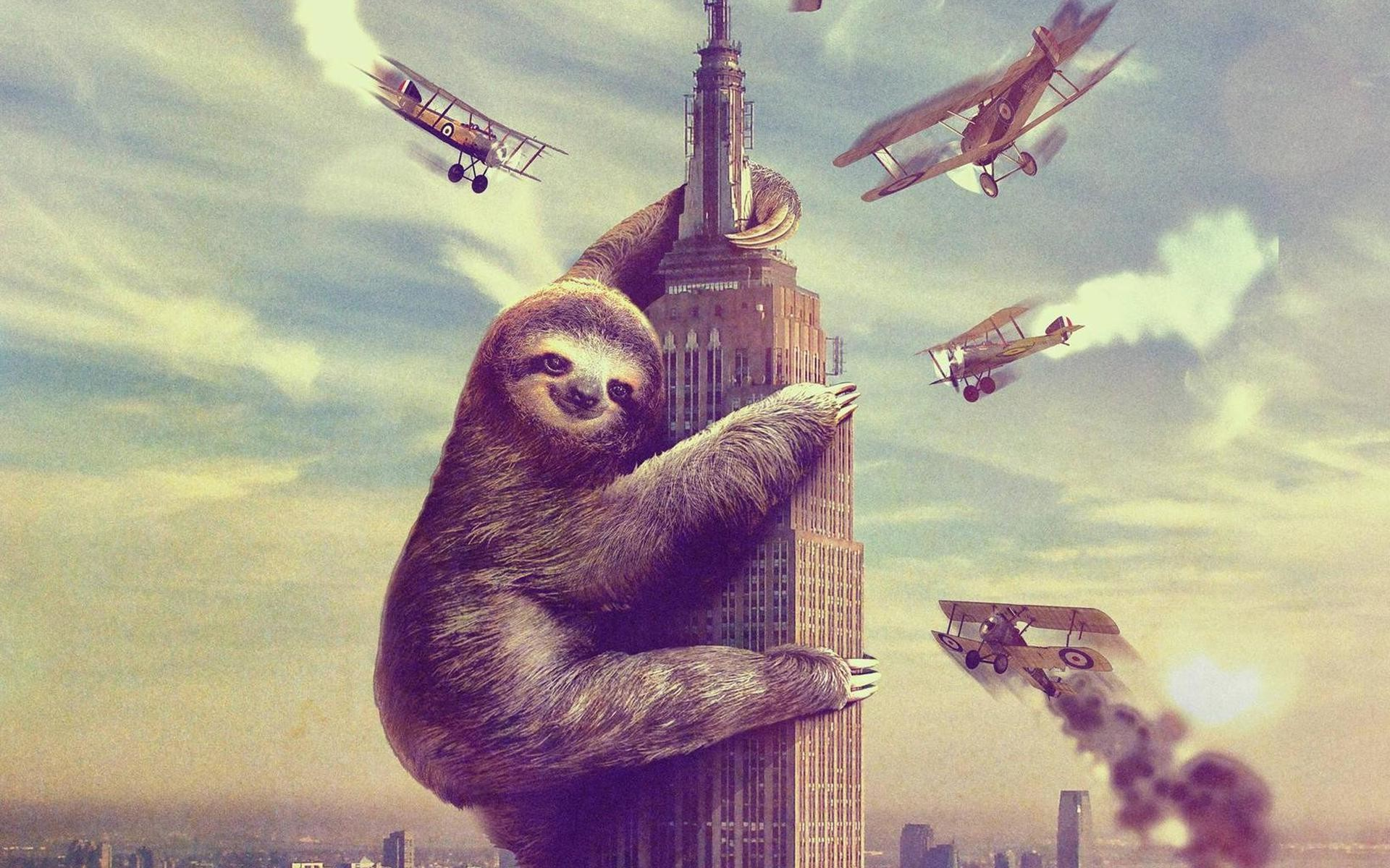 1920x1200 HD Sloth Images HD Sloth Wallpaper