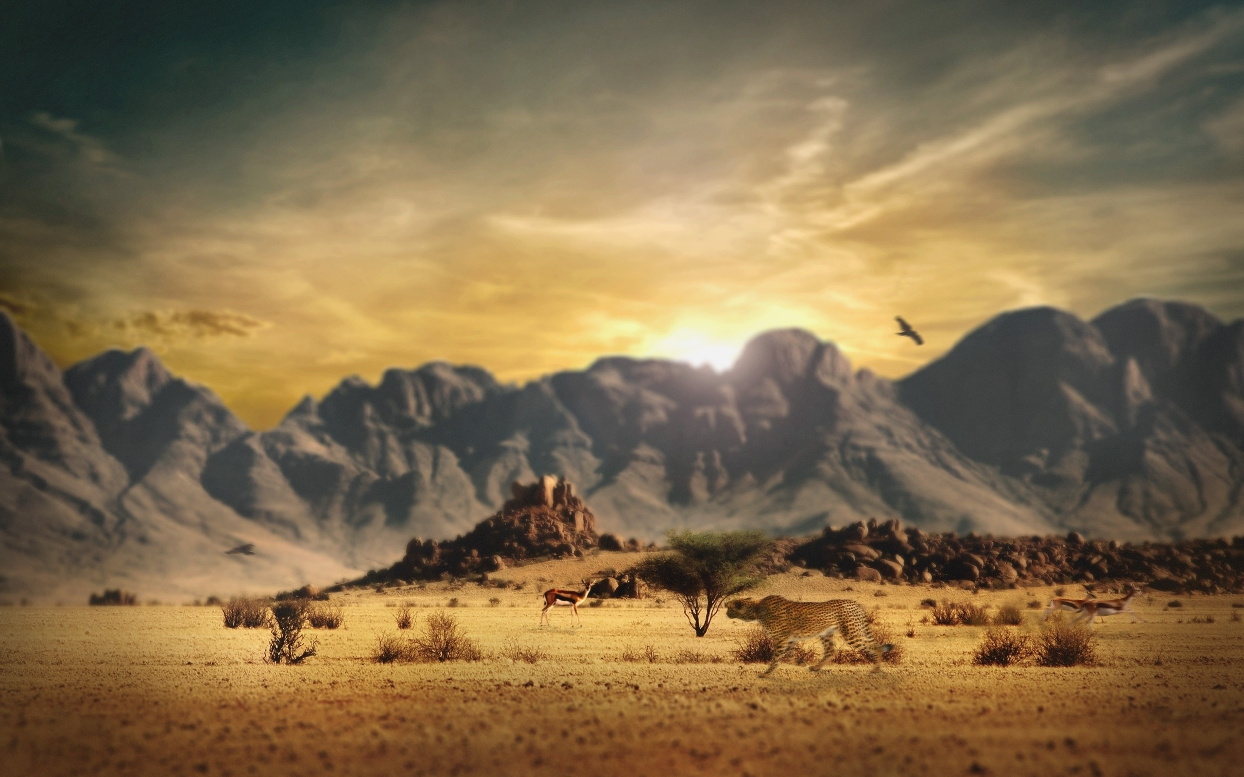 2560x1600 Wallpaper Cheetah, Savanna, Hunting, Mountains