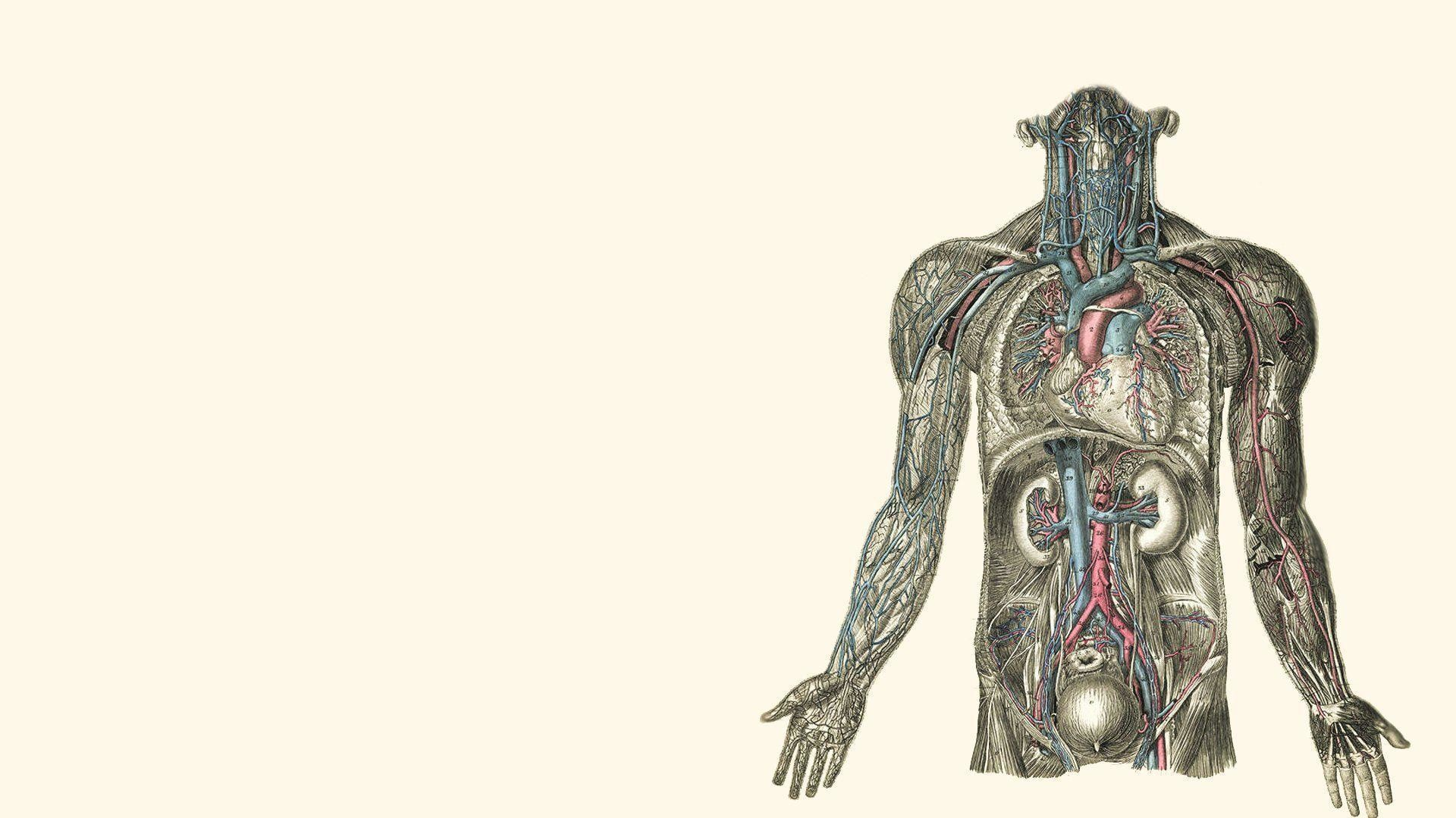 Human Body Wallpapers (72+ Images