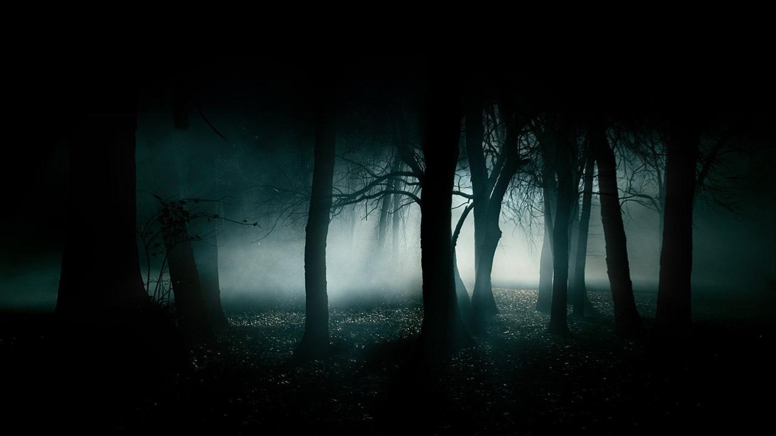 Creepy Forest Wallpaper 66 Images
