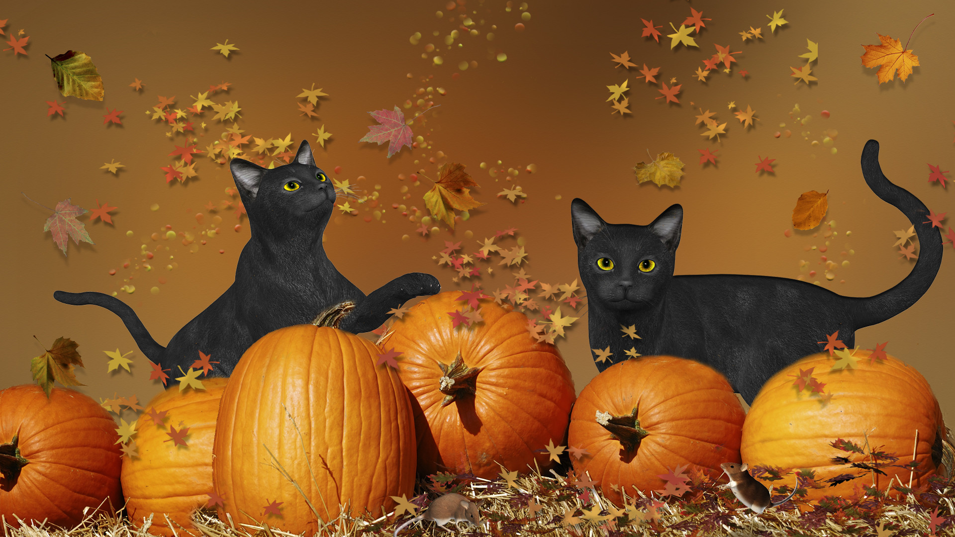 1920x1080 Cute Halloween Cats Festival Collections