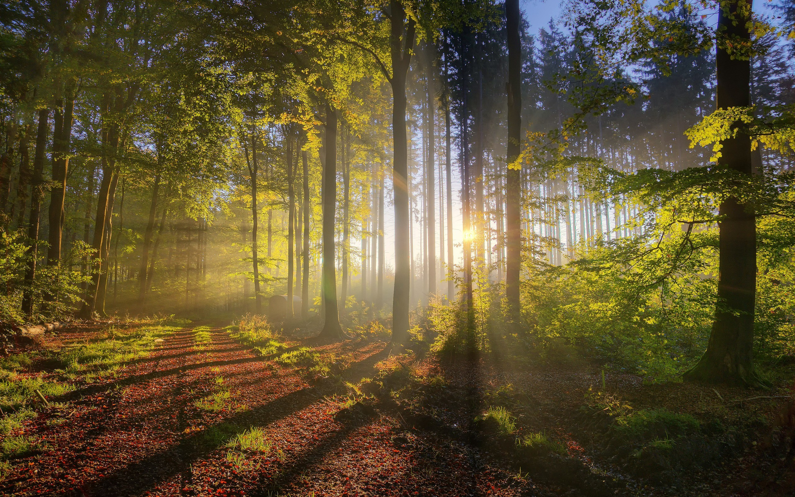 2560x1600 ... Forest sunlight wallpaper | AllWallpaper.in #13839 | PC | en ...