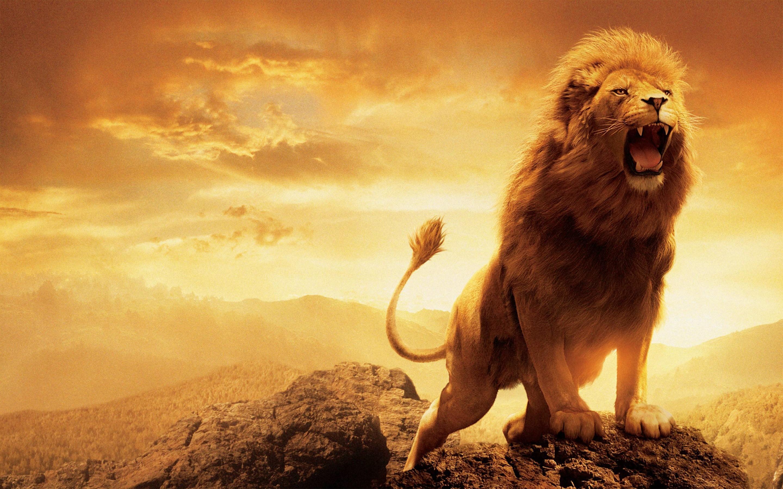 Aslan Resimleri - En Güzel 15 Aslan Resmi   Fotoğraf İndir