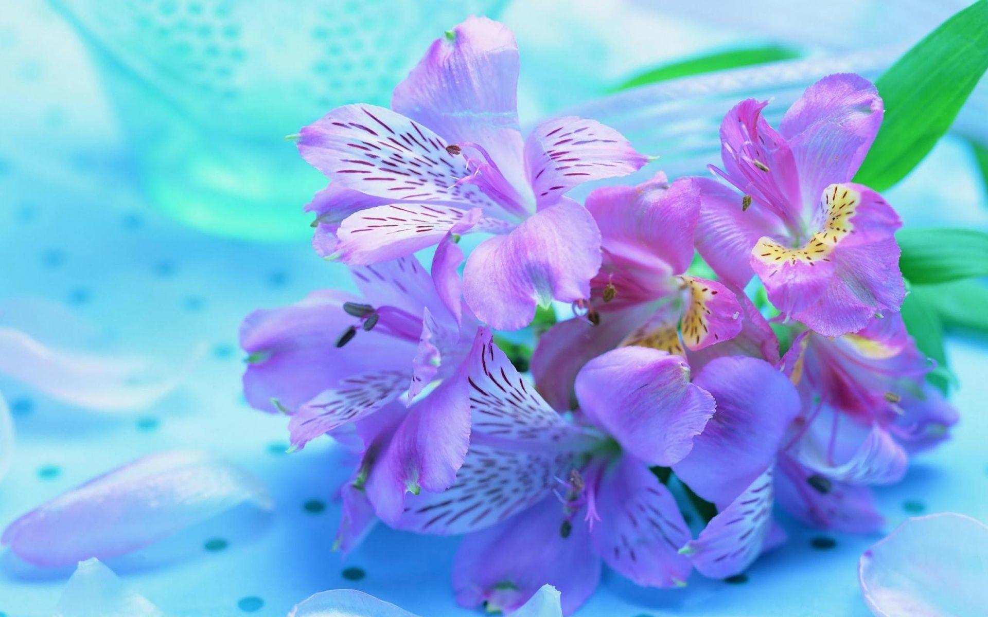 Pretty Flower Wallpaper (49+ images)