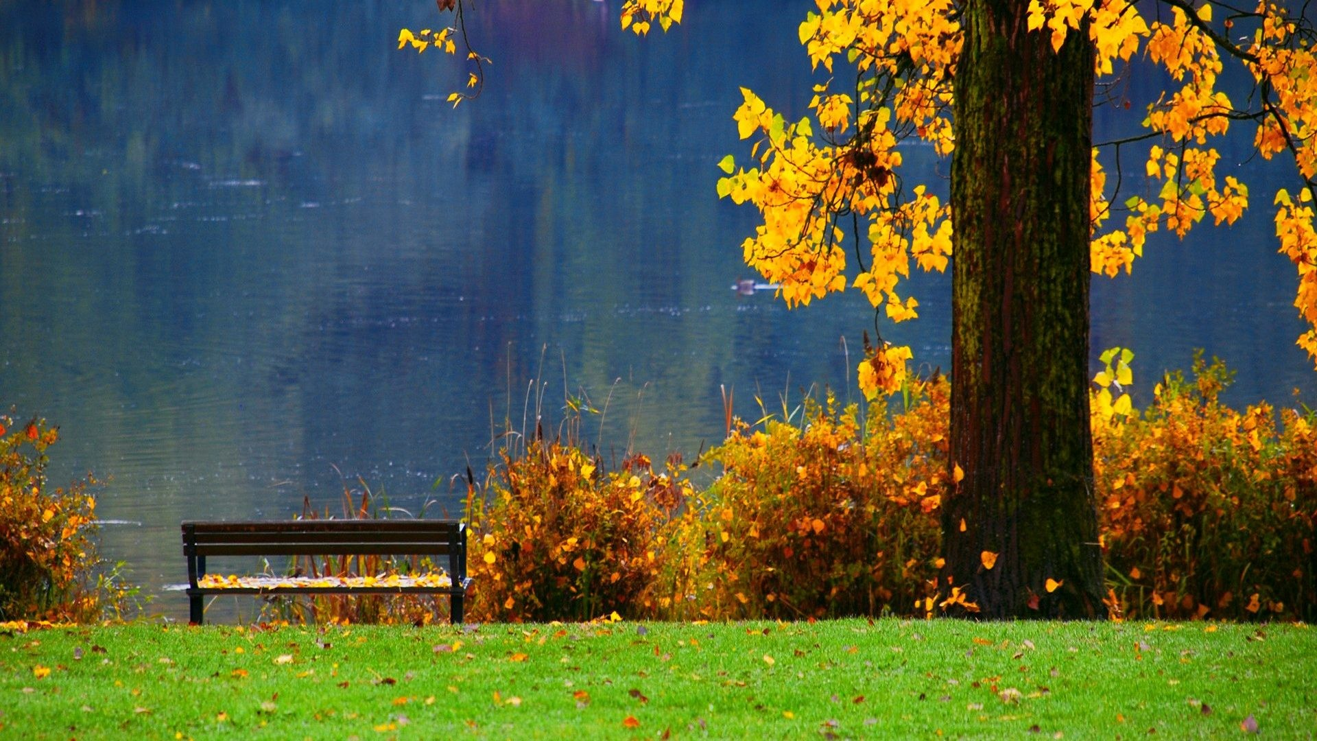 1920x1080 Walk Pretty Falling Lovely Fall Tree Rest Sunny Autumn Branches Lakeshore  Seat River Green Bushes Reflection Shore Beautiful Lake Grass Foliage  Greenery ...