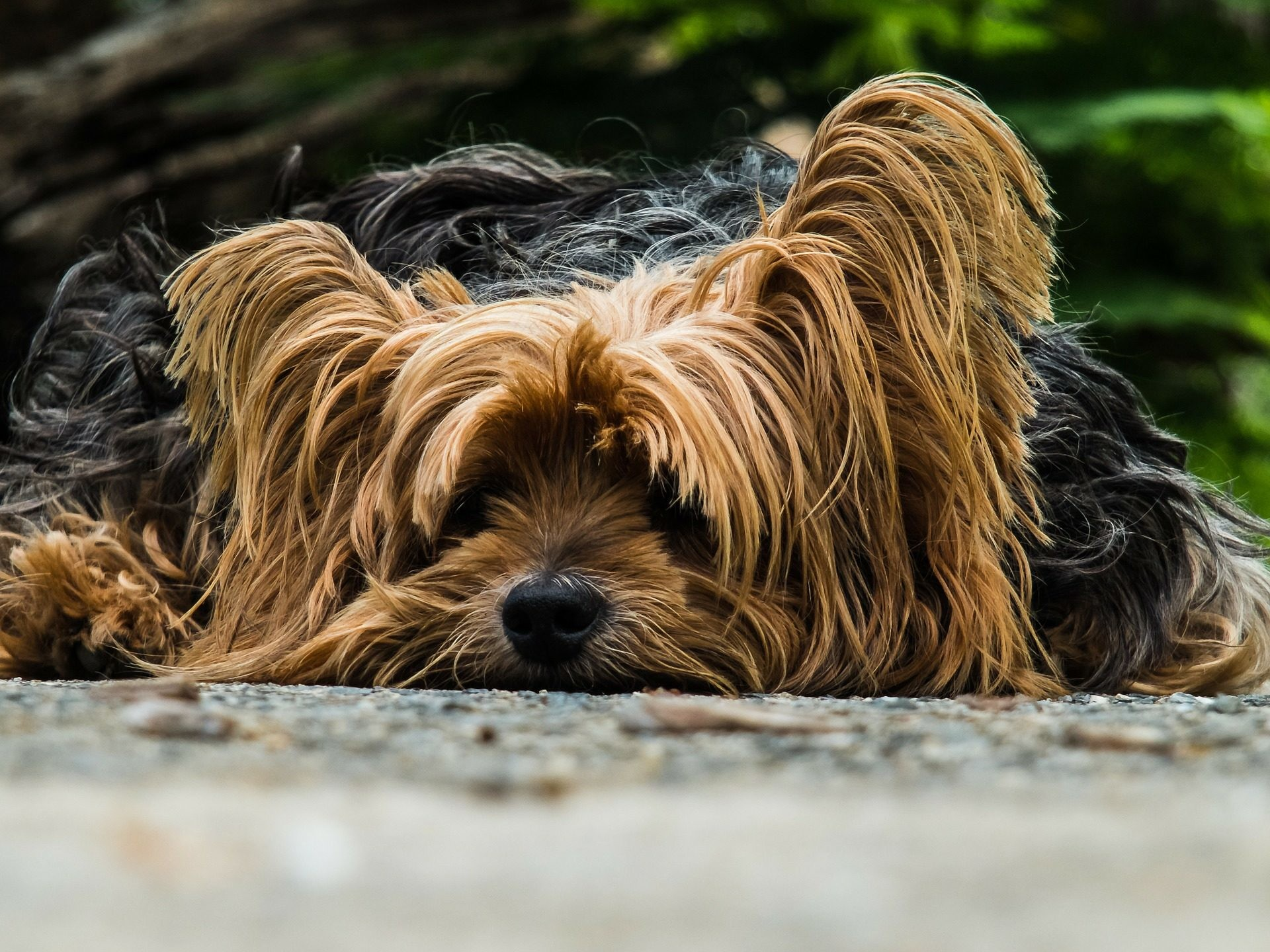 1920x1440 Explore Yorkie Dogs, Cute Dogs, and more!