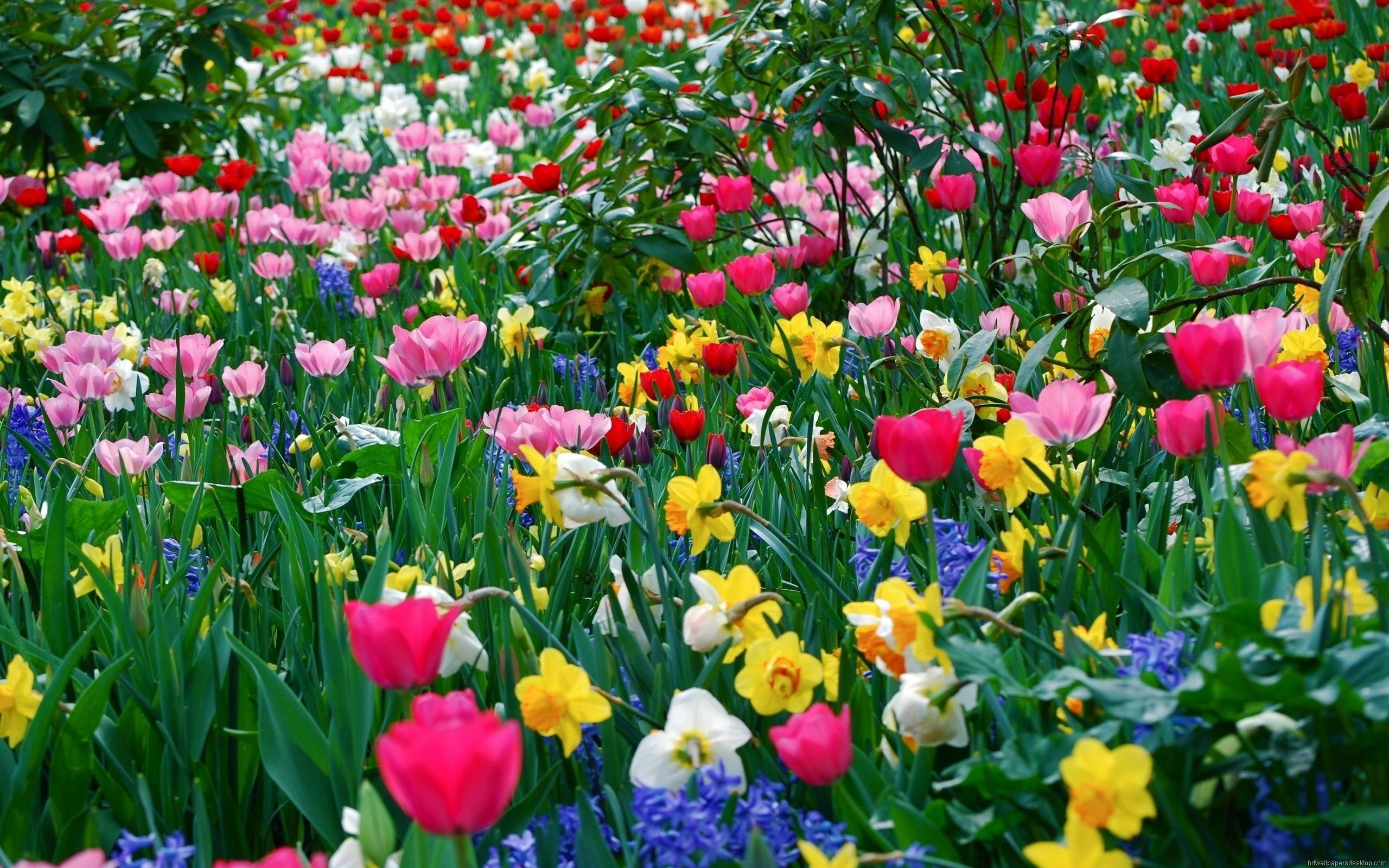 2560x1600 Beautiful Flower Garden Wallpaper Widescreen 2 HD Wallpapers .