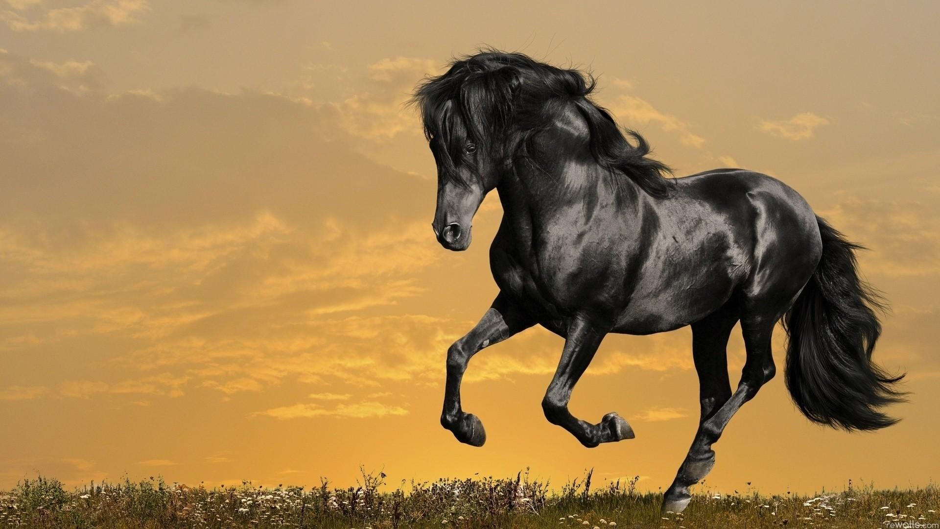 2689x1441 Wild Horses Wallpaper