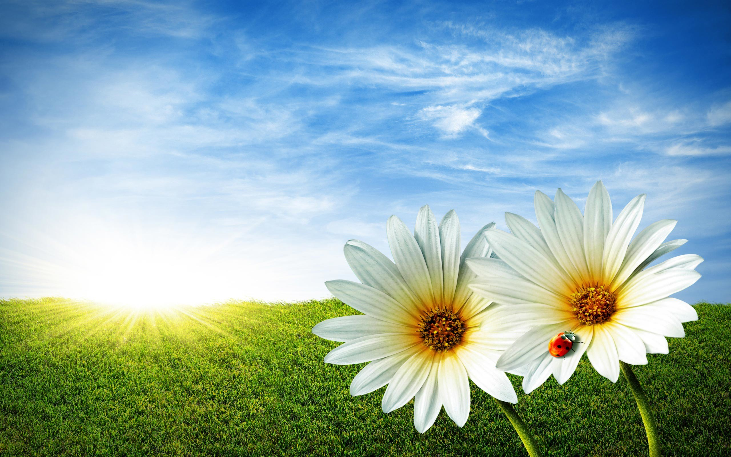 2560x1600 wallpaper.wiki-Spring-flowers-background-download-free-PIC-