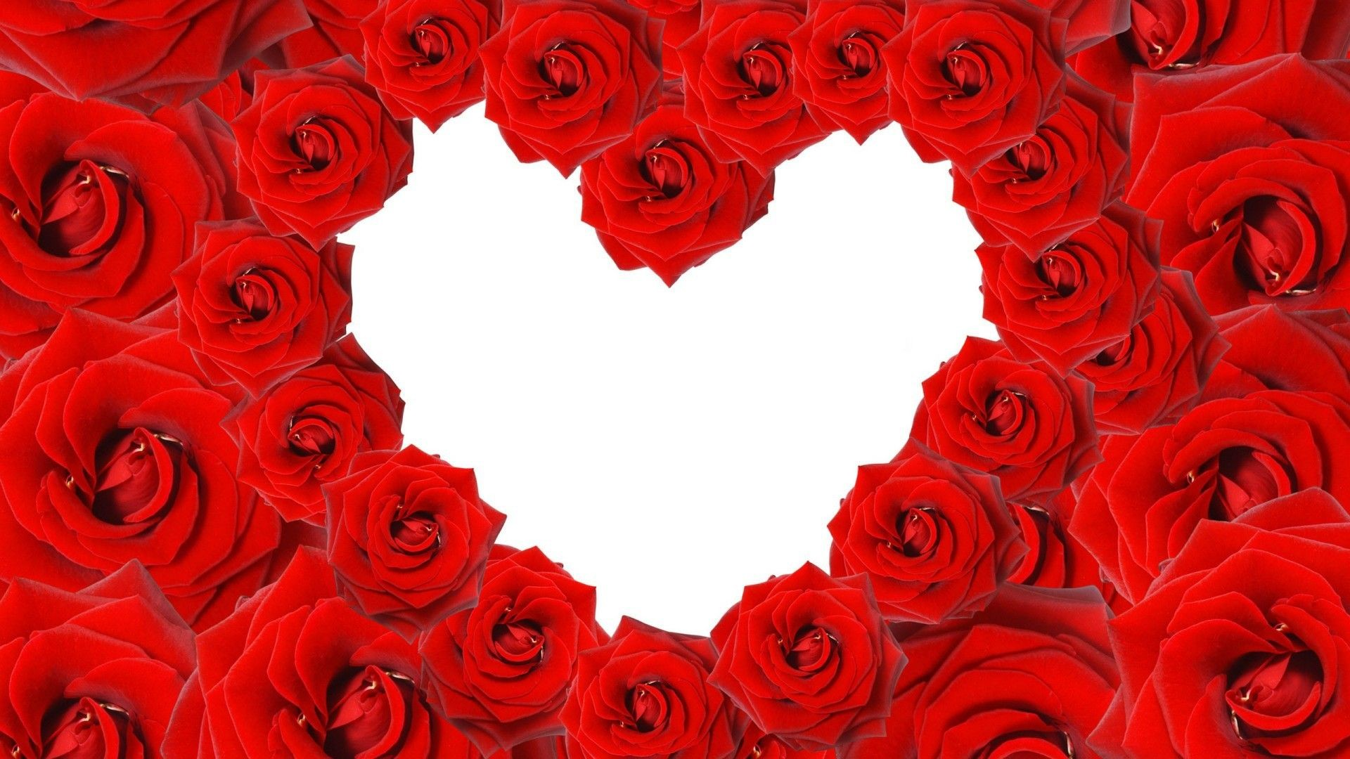 1920x1080 Love Red roses in a heart shape on white background