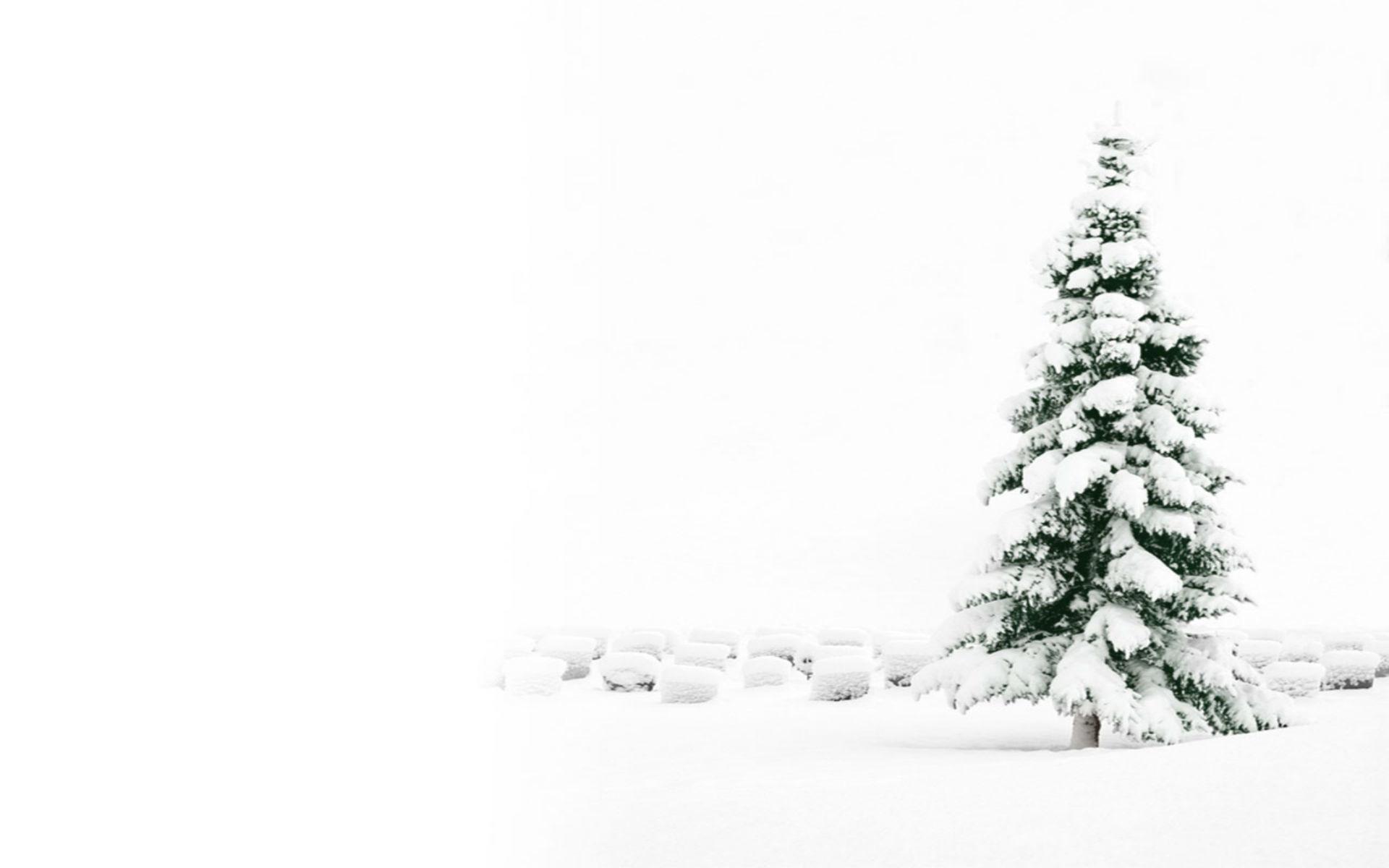 White Christmas Wallpaper 74 Images