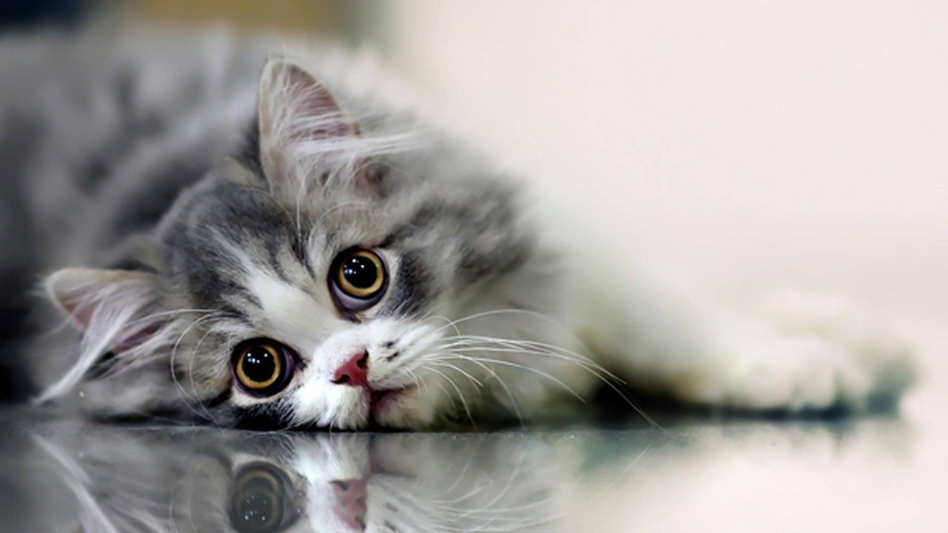 1920x1080 Cute Cat Wallpaper - id:100152705