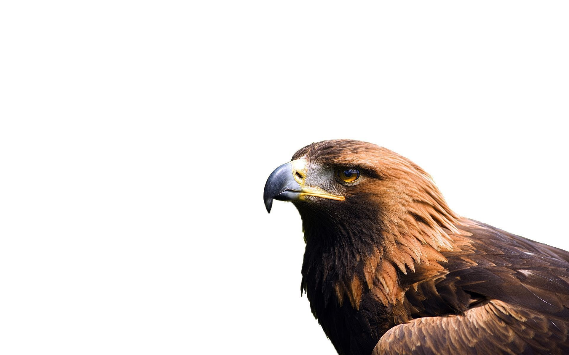 1920x1200 Jasmin Recker: Top HD Eagle Wallpapers, HDQ – free download