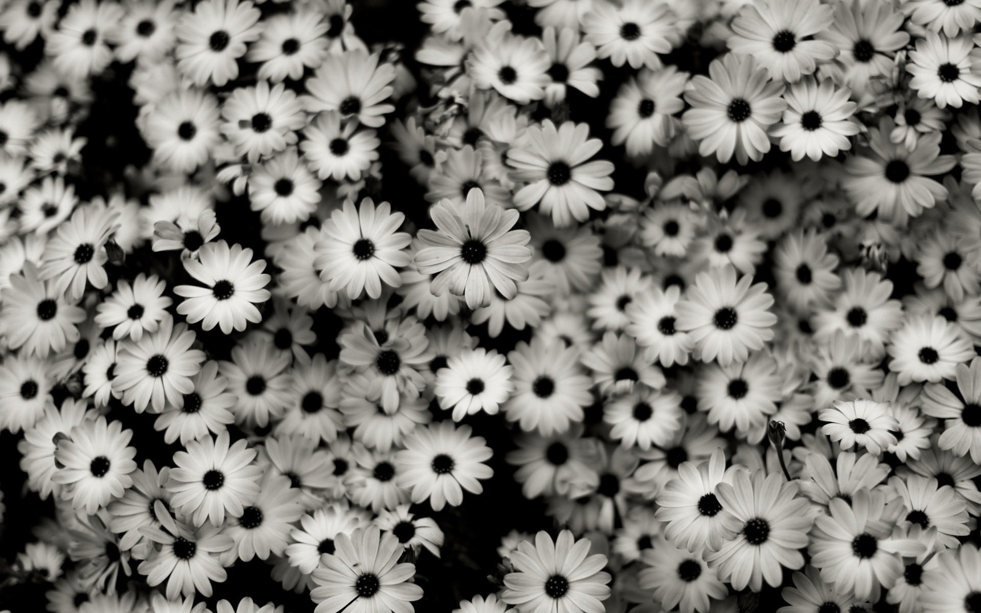 1920x1200 black and white flowers background wallpaper 1139322