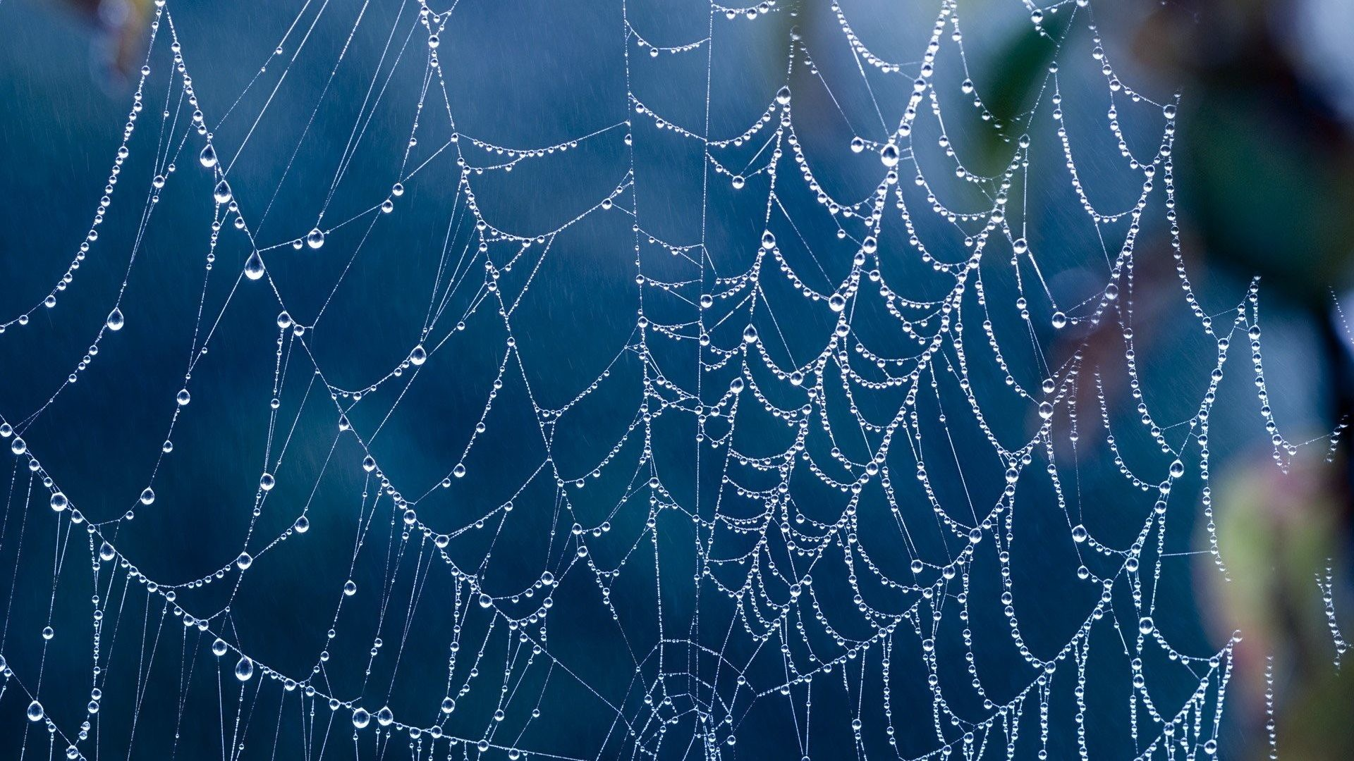 1920x1080 Webs Tag - Creepy Spider Webs Hd Full Size Nature Wallpaper for HD 16:9