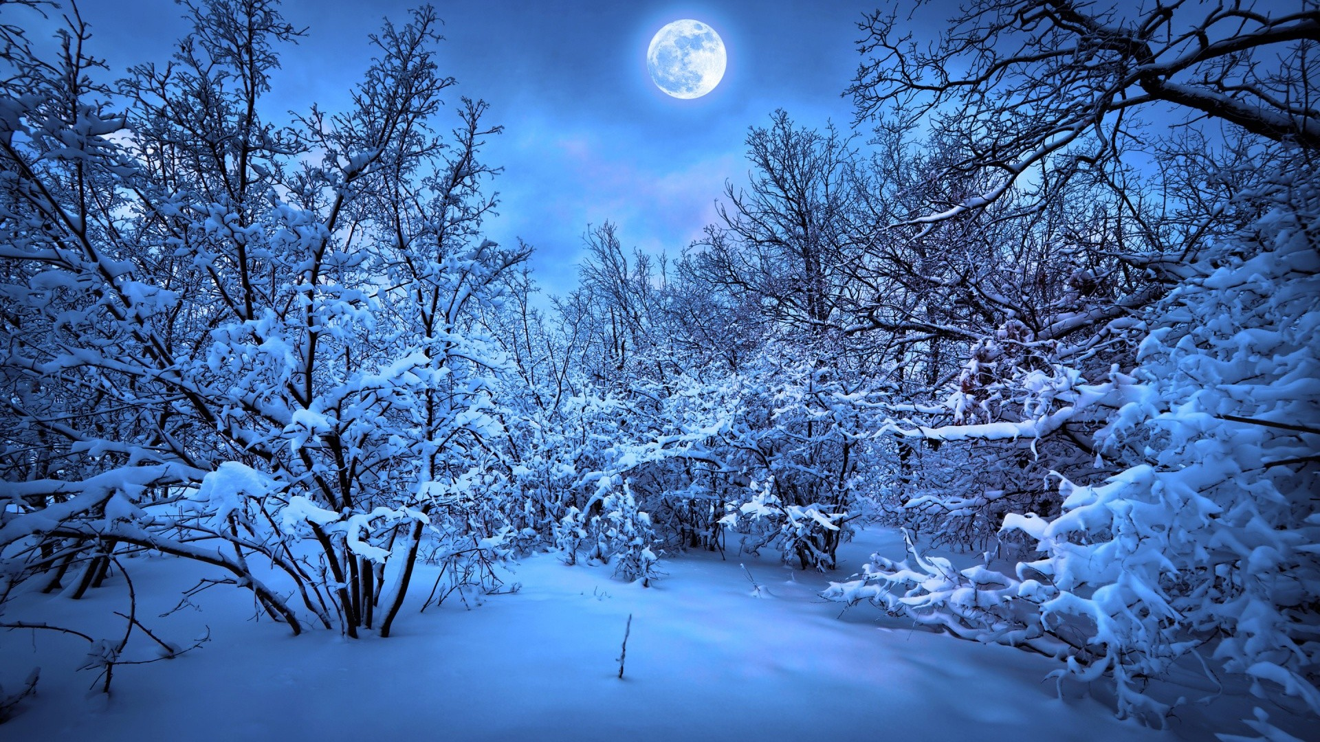 1920x1080  Blue Winter Forest Full Moon