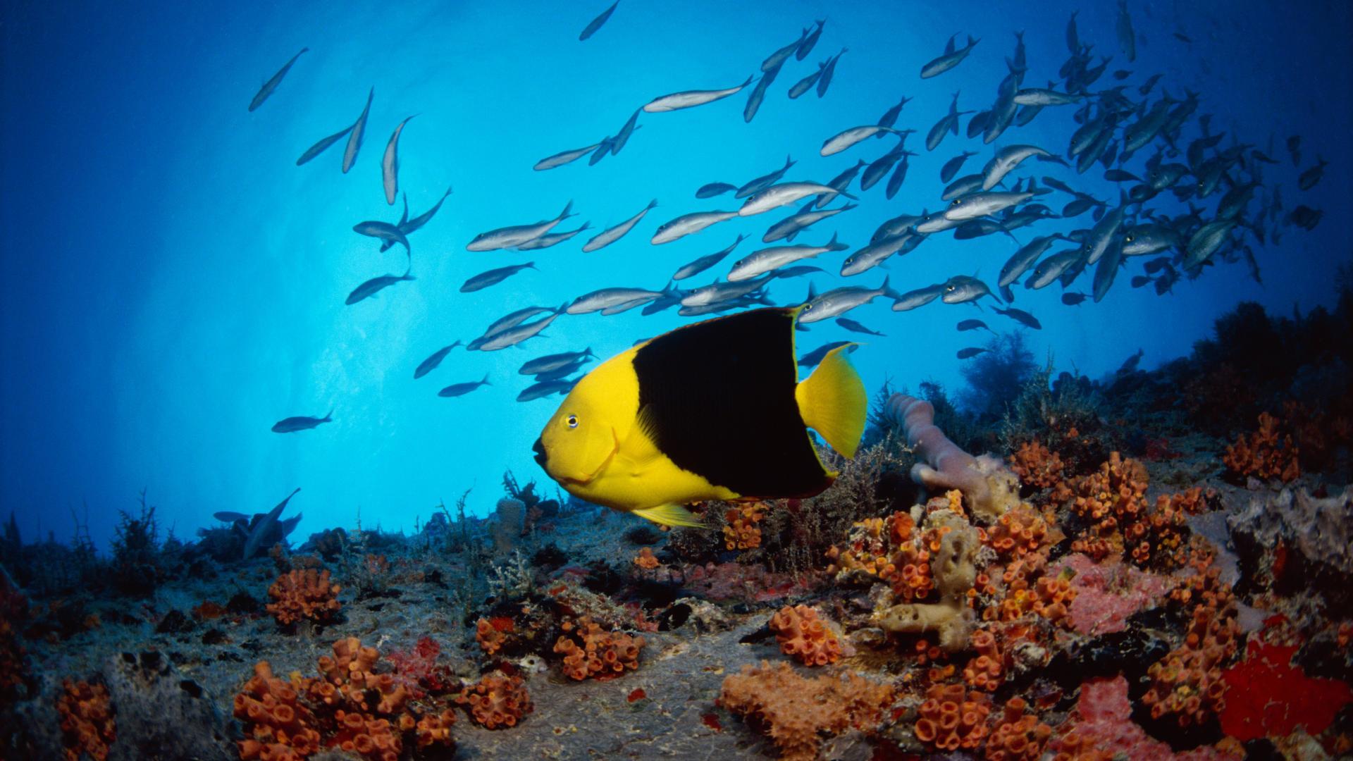 HD Underwater Widescreen Desktop Wallpapers Download at
